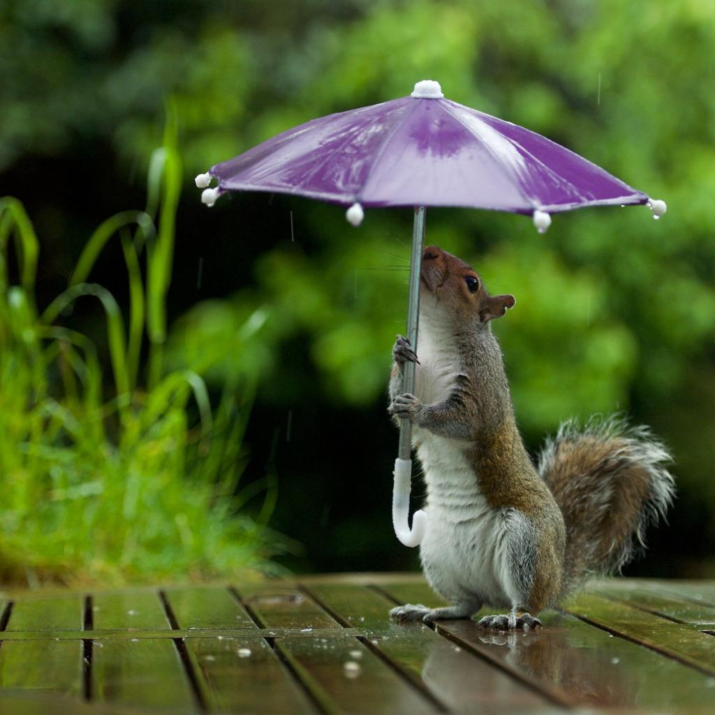 Открытка желаю хорошего настроения в любую погоду, открытке подружке анимация