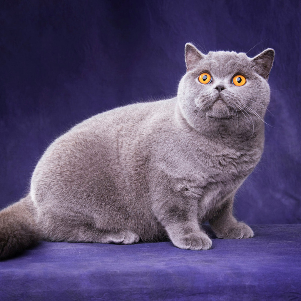 Кошки куклачева фото кошек месте продумать