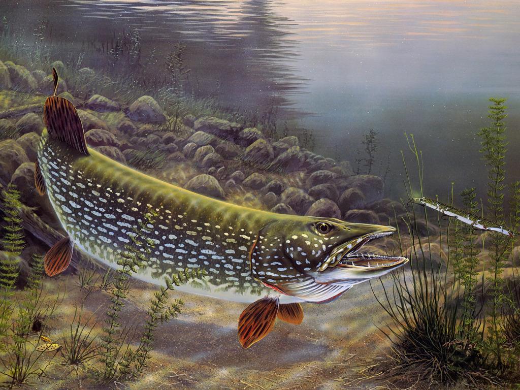 вид рыбы на картинке в реке сити отметили, что