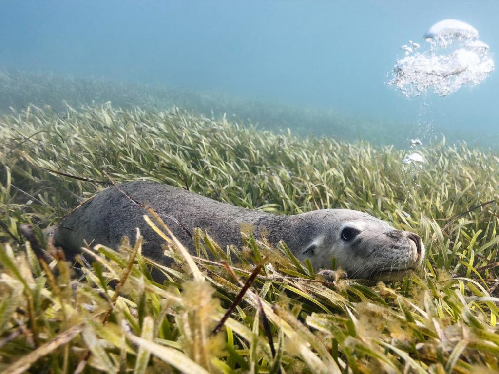 морские животные австралии картинки поздравления красивые слова