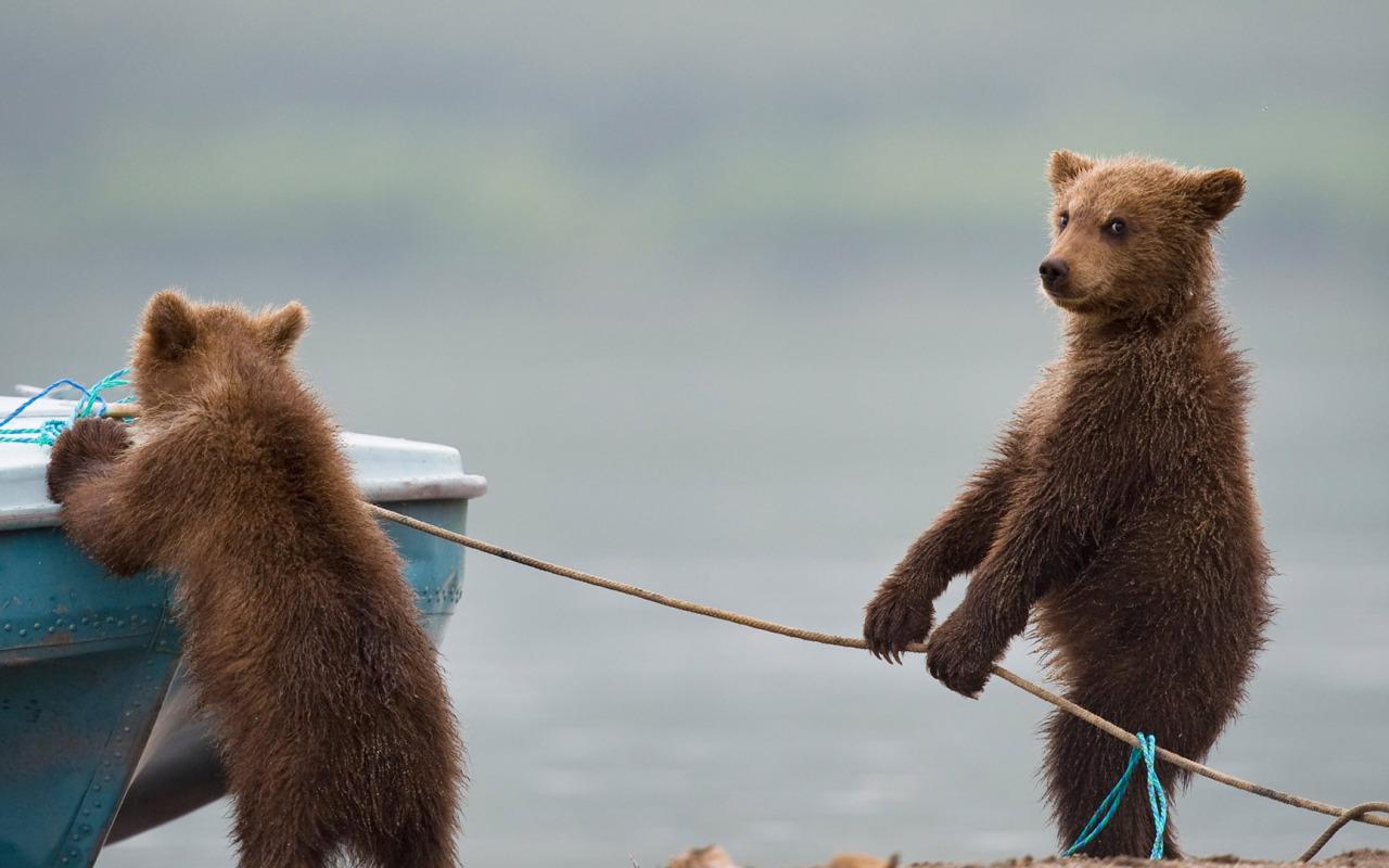 Картинки со смешными медведями