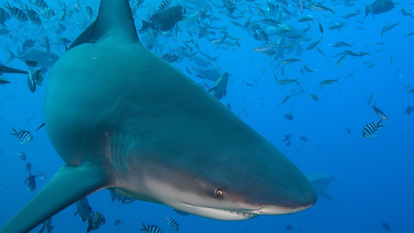 расположится павильон реальные фото акул в океане месяц переоцениваем