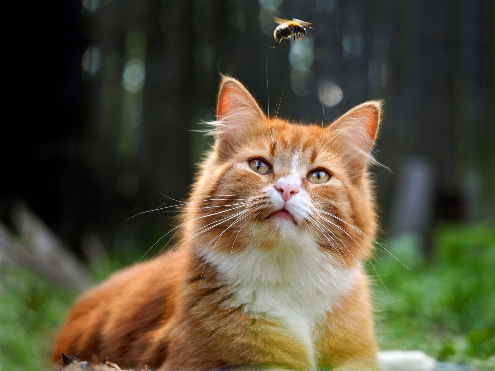 Надпись, веселый рыжий кот картинки