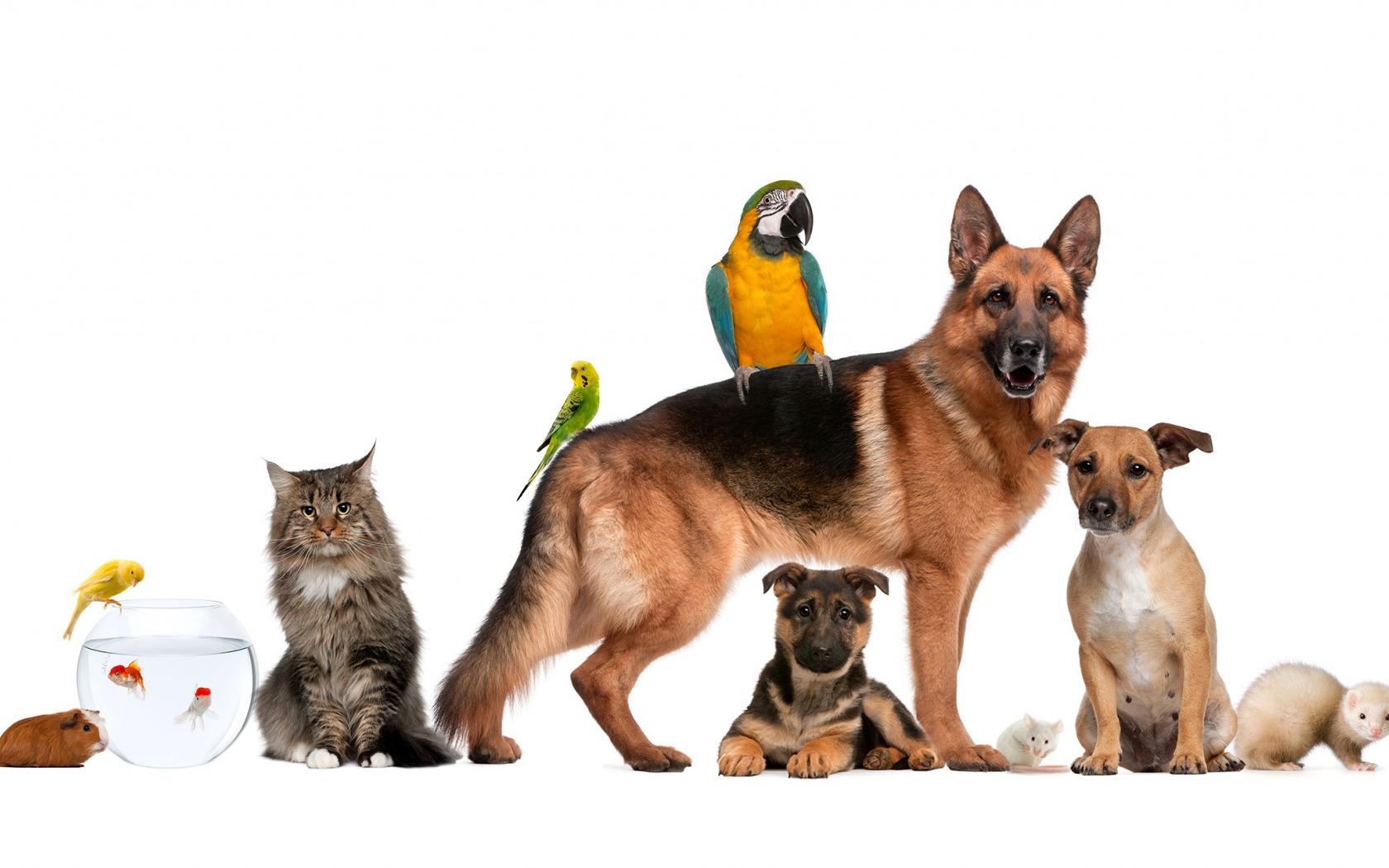 Обои для презентации домашние животные