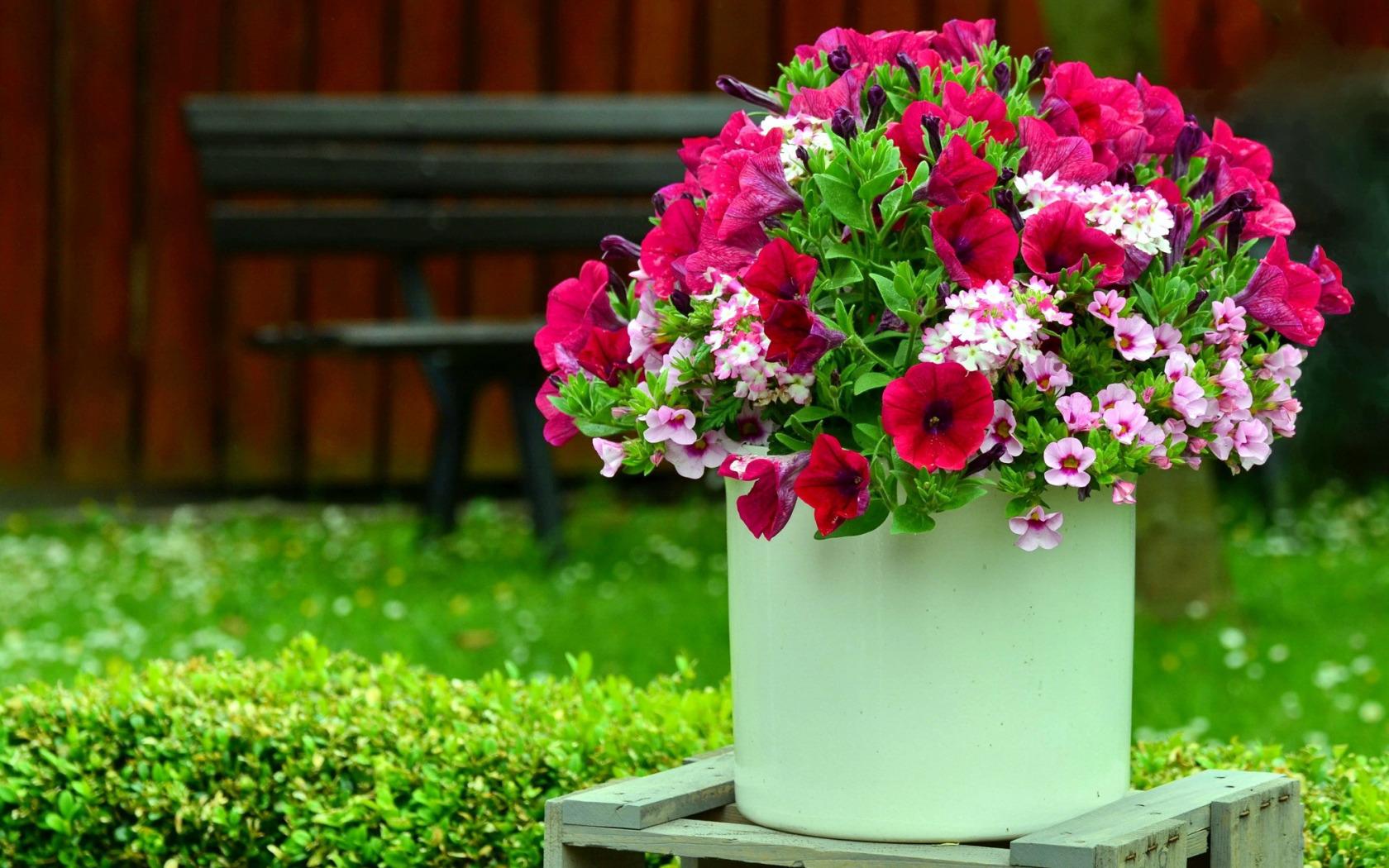 Ромашки букет, купить цветы петунья для ваз