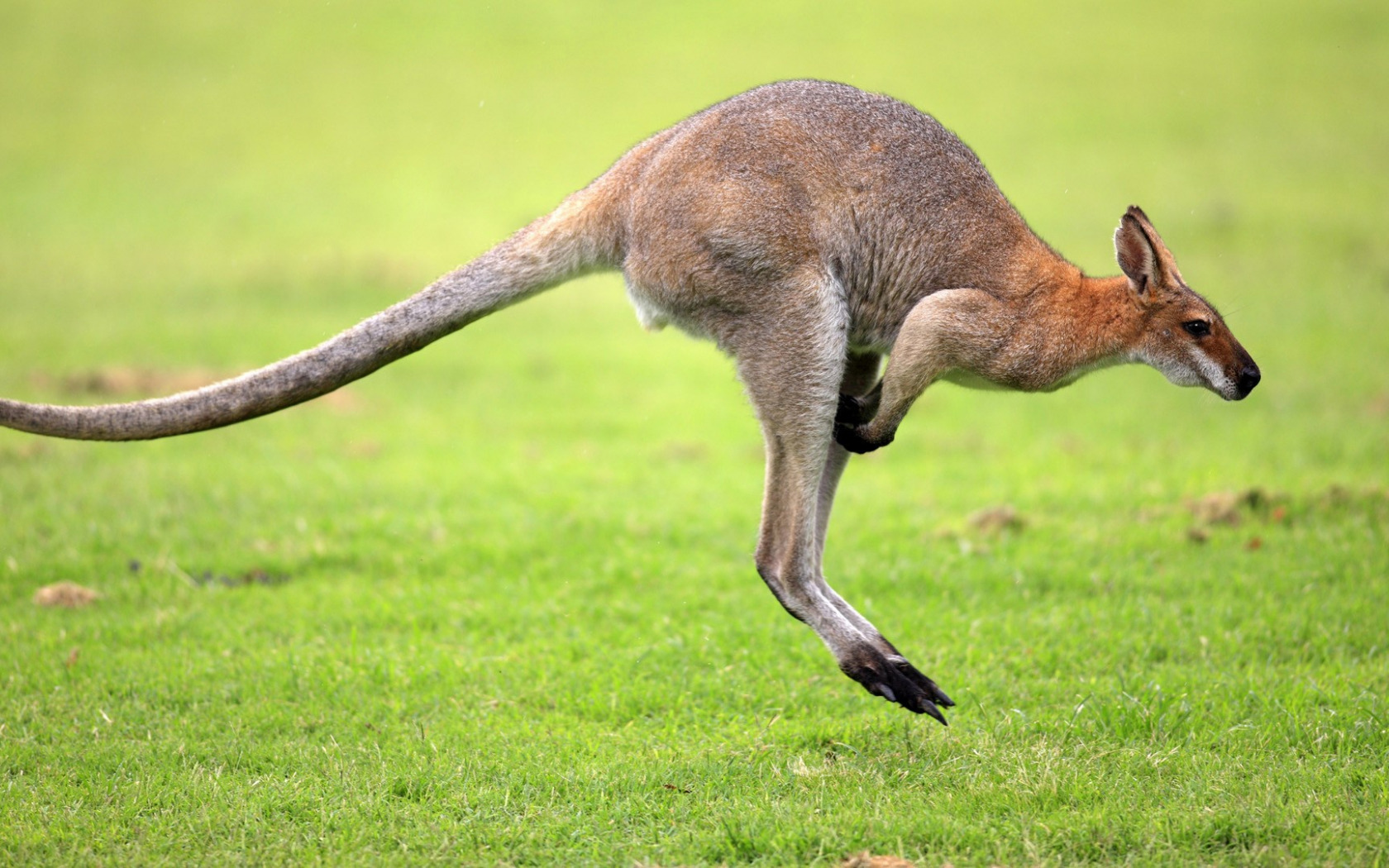 Секс с кенгуру онлайн, Кенгуру секс. Смотреть на сайте online 18 фотография