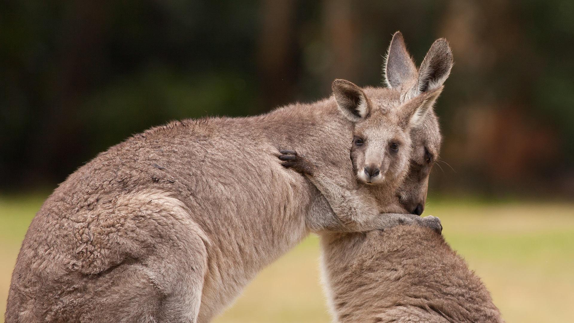 Картинки австралия прикольное