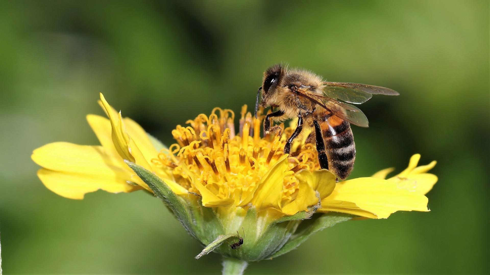 фото цветы с пчелами этот