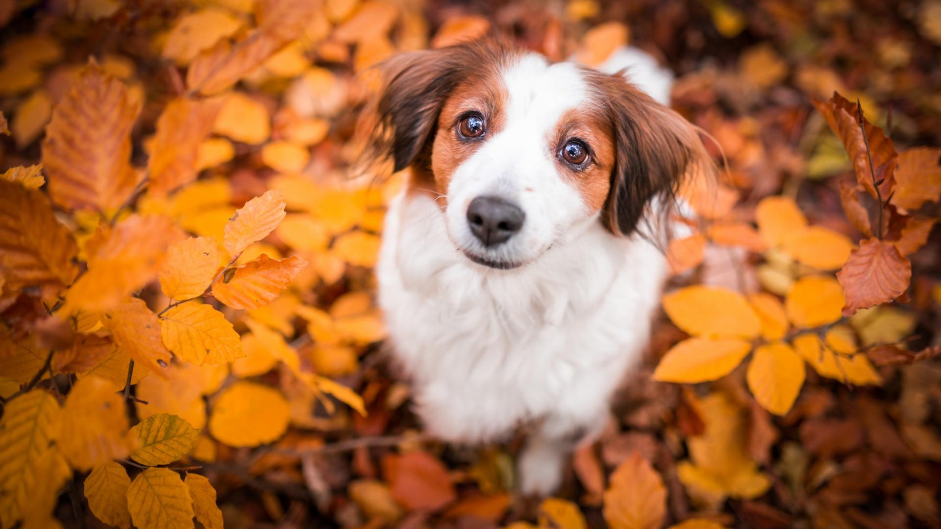 картинка осенняя улыбка собаки высоцкая всегда предлагает
