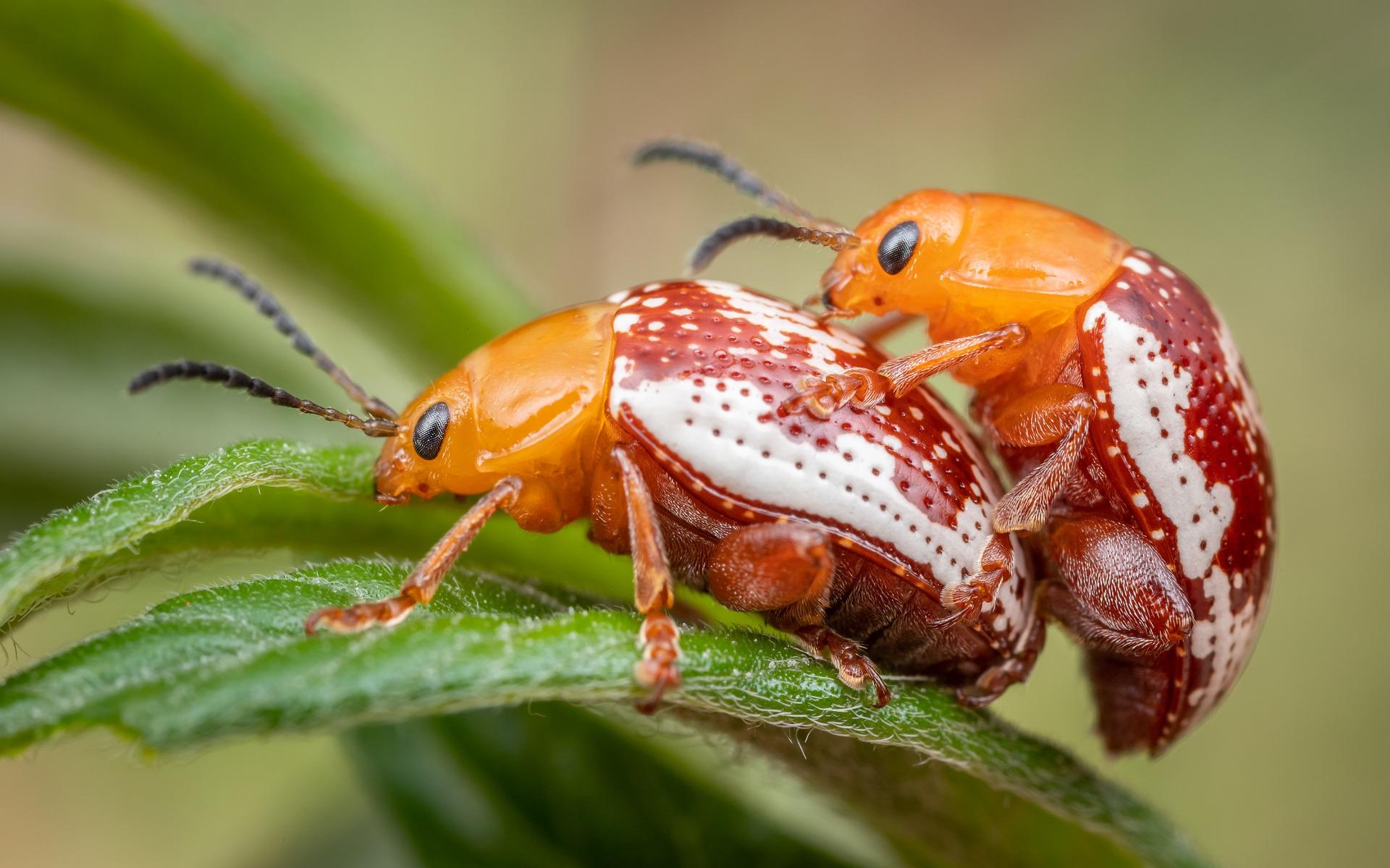 объектов, природа какие есть жучки жуки картинка нас