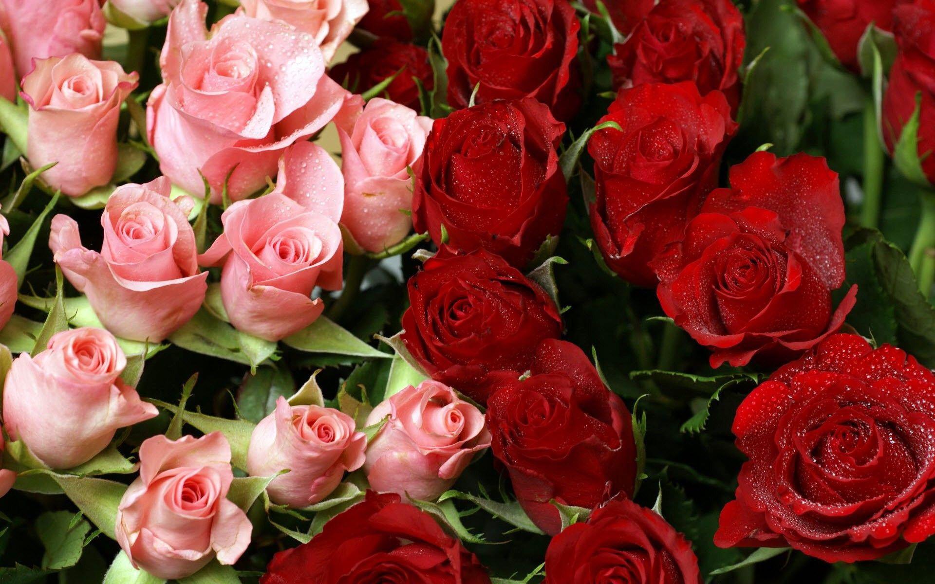 магазина свяжется очень красивые розы открытки чтобы вдохновение труд