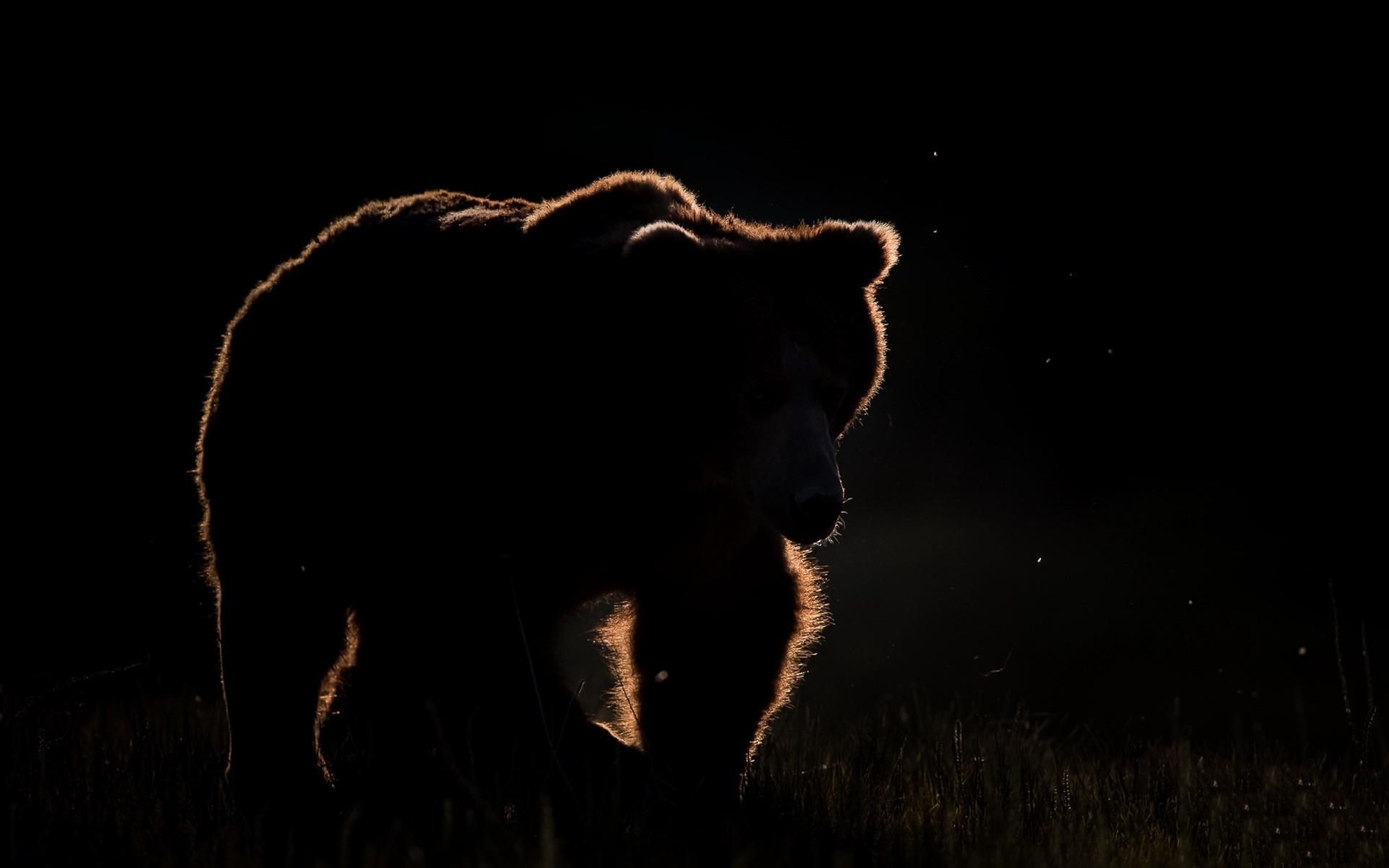 некоторые картинки медведь на черном фоне берет уроки