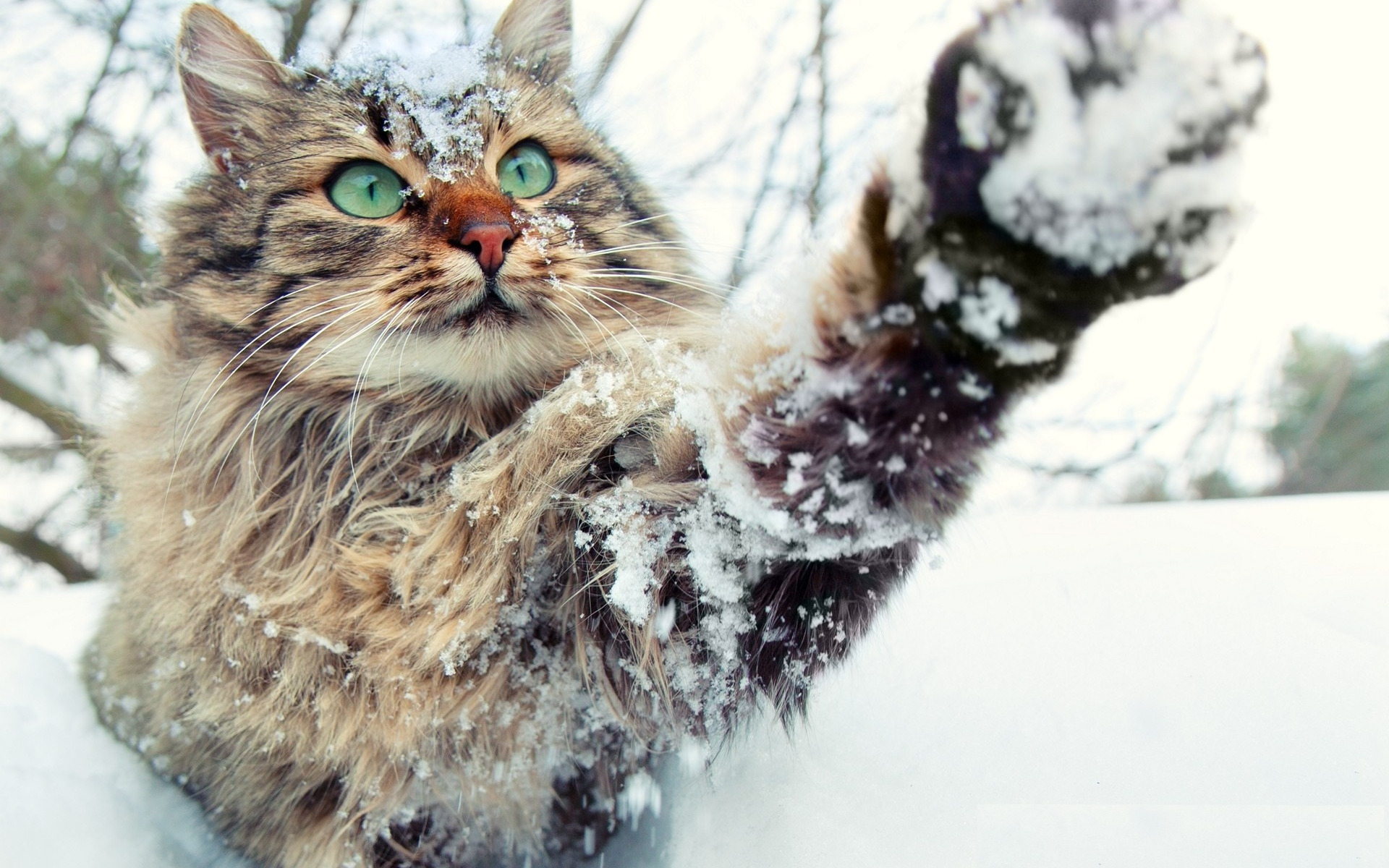 Картинки кошка под снегом