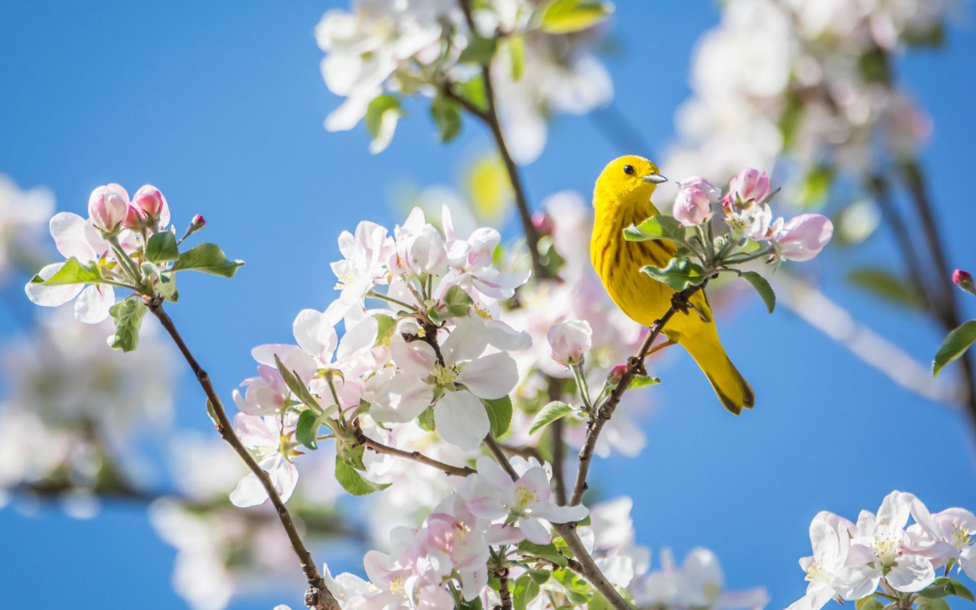 птичка весной картинка