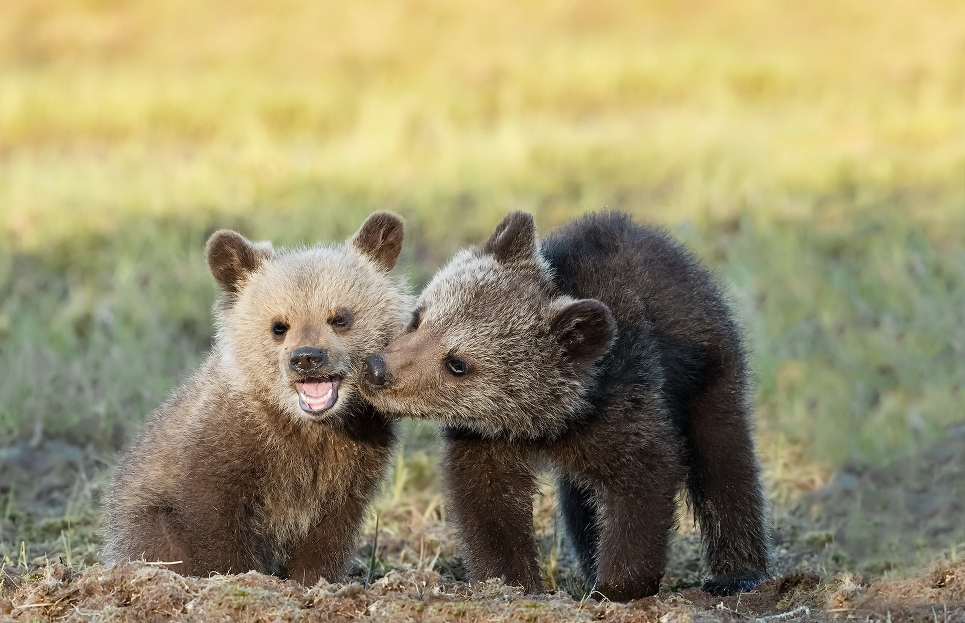 полугодовалый медвежонок фото денег