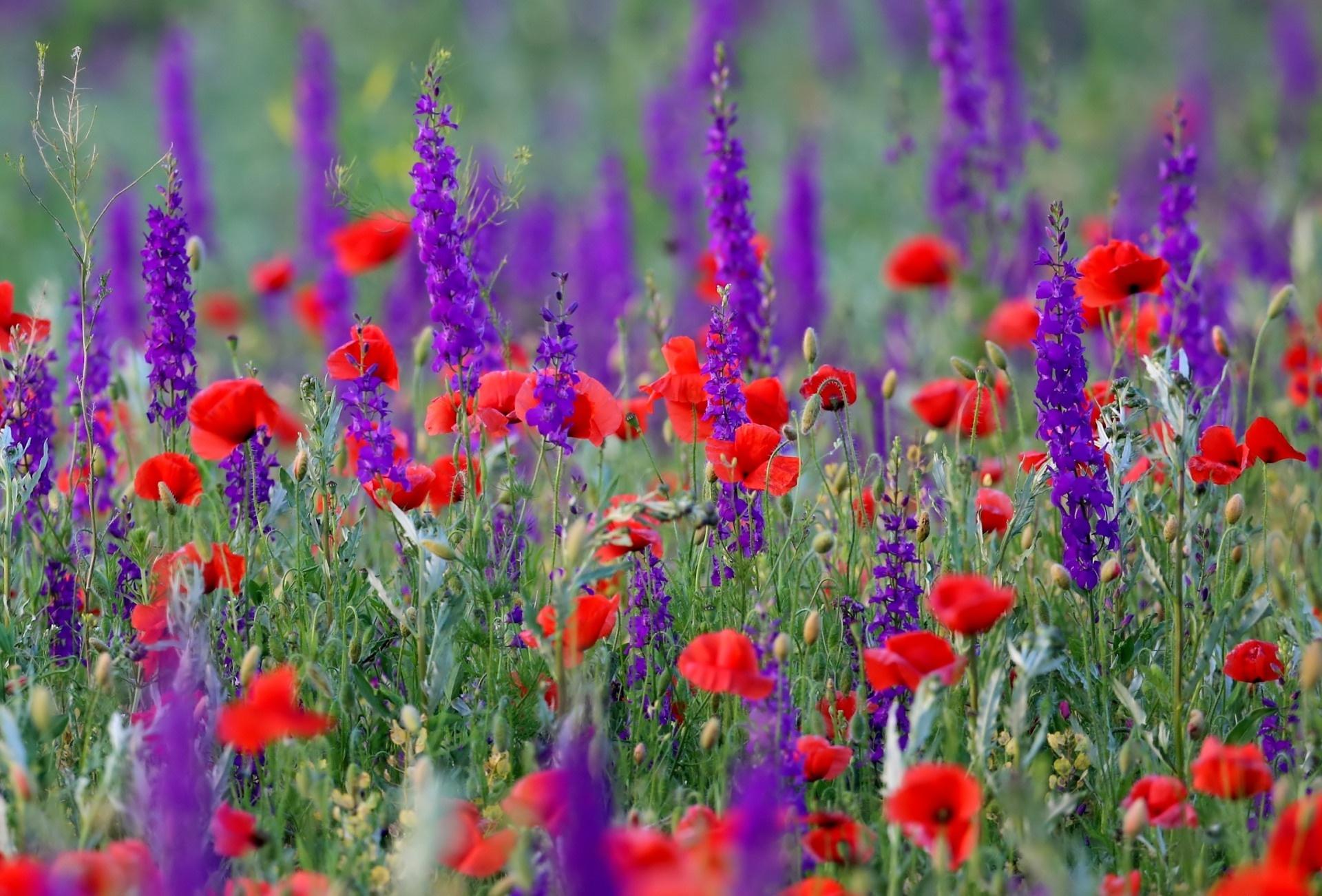 гиф луговые цветы урожай айвы
