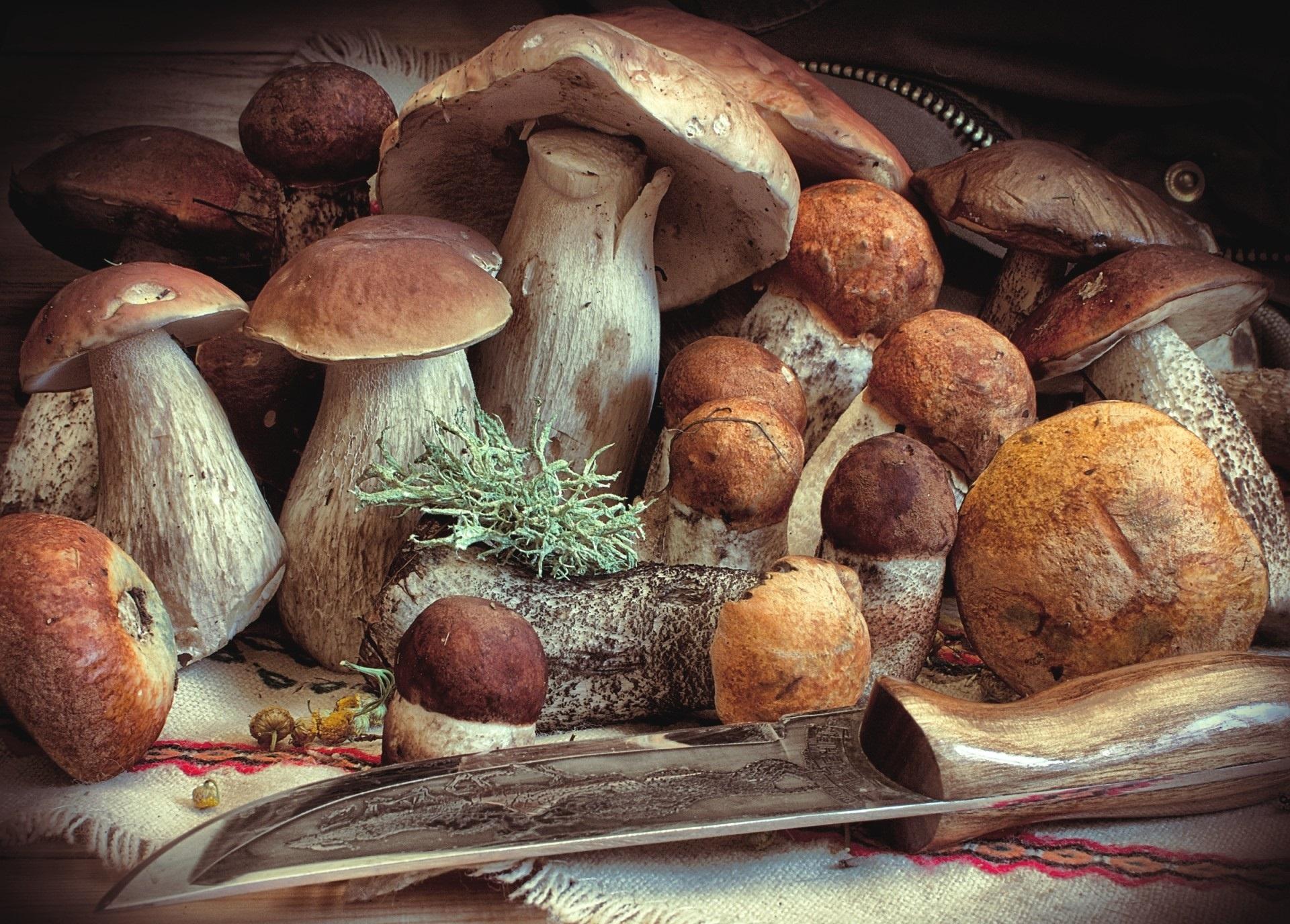 свон грибы в картинках италии большой успех