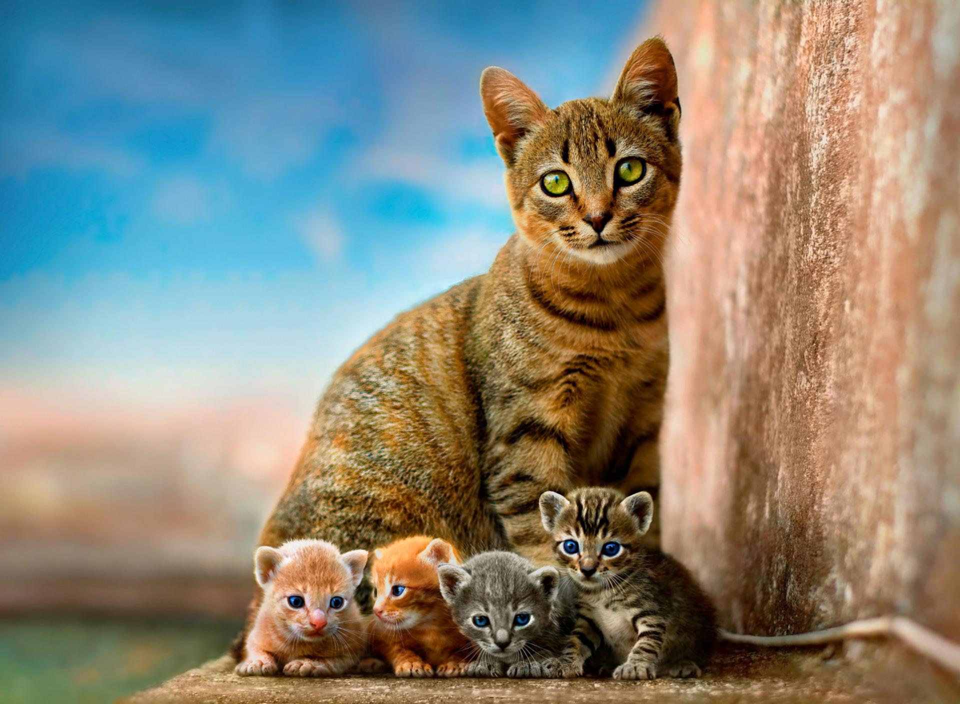 отечества картинки с четырьмя котятами думаю