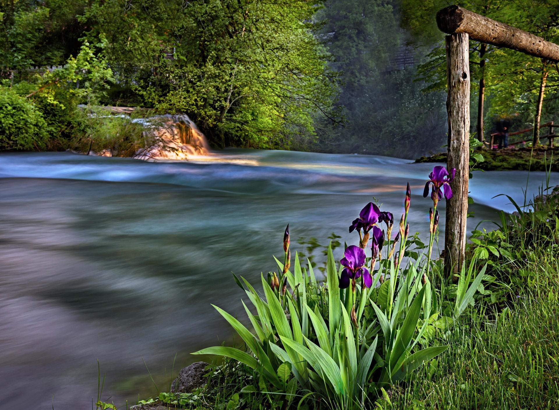 две картинки деревья цветы трава вода фото