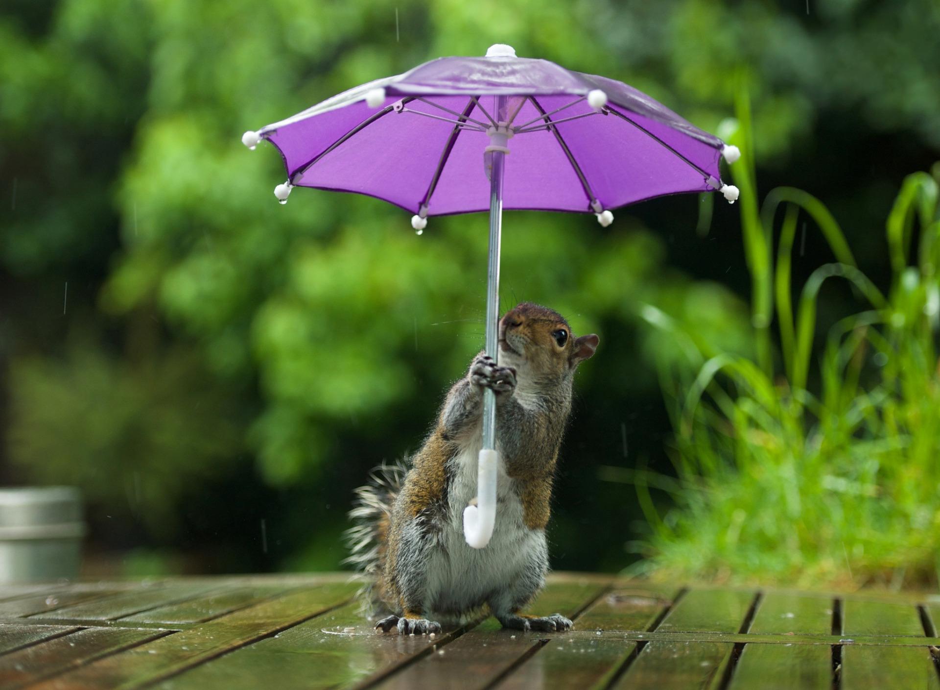 Смешные картинки в дождь