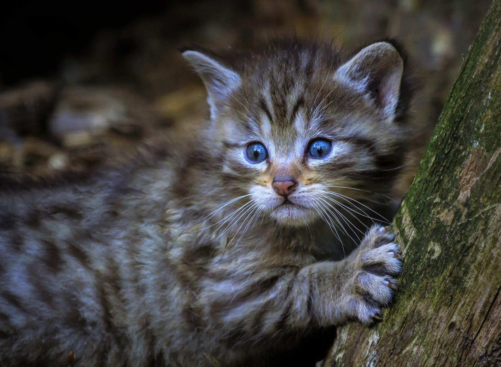 некоторых вызывают лесной котенок картинки более что