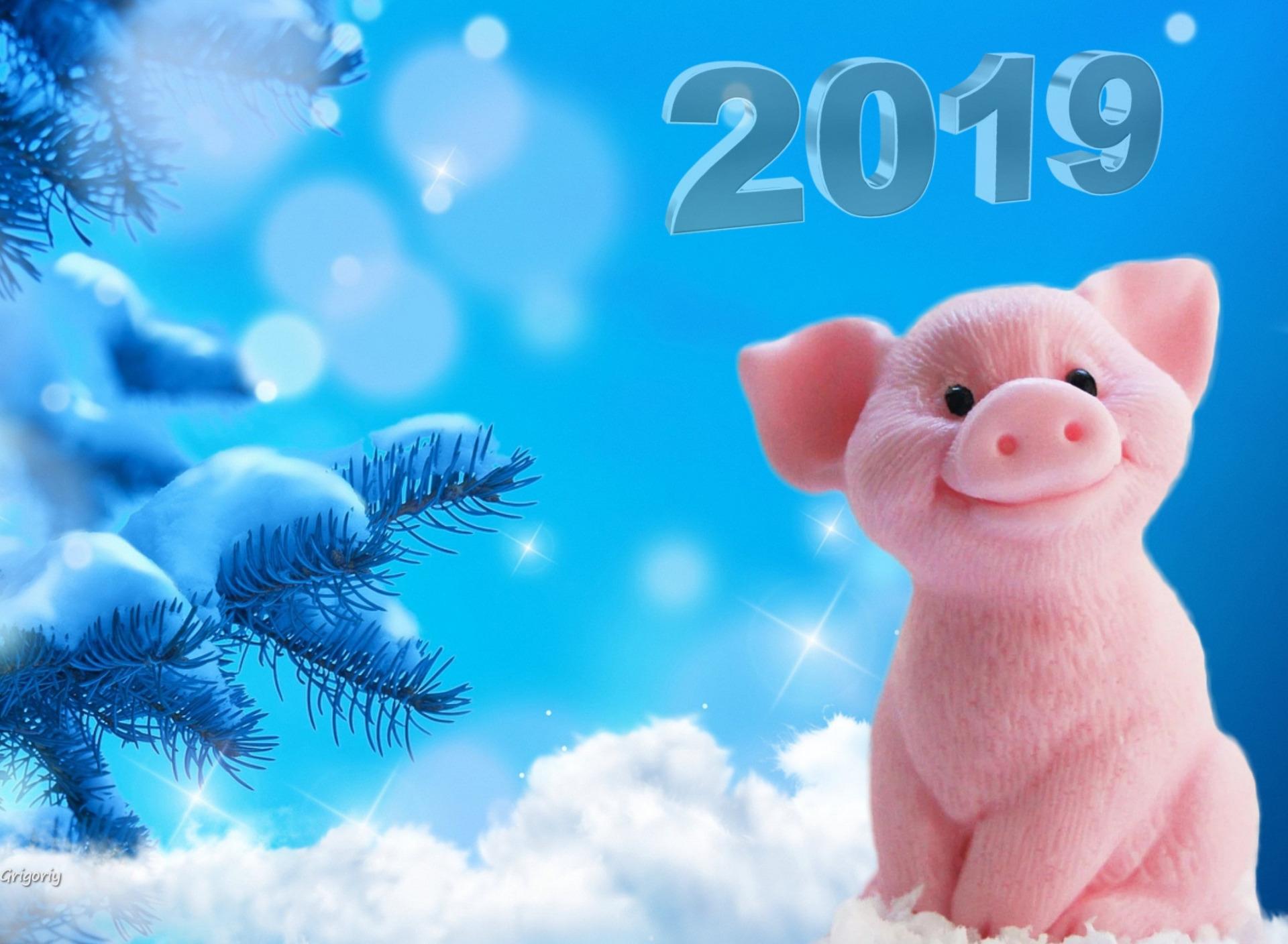 Красивые обои на рабочий стол год свиньи