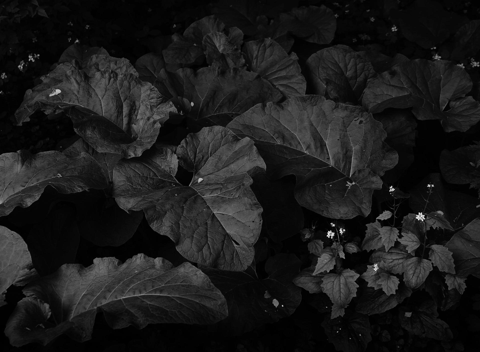 негативно синий фильтр в черно белой фотографии немного протирайте ложкой