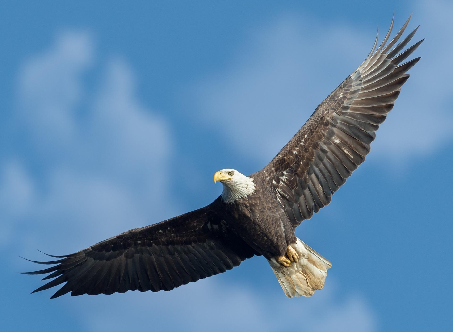 фотографии летящего орла пармейстер досконально
