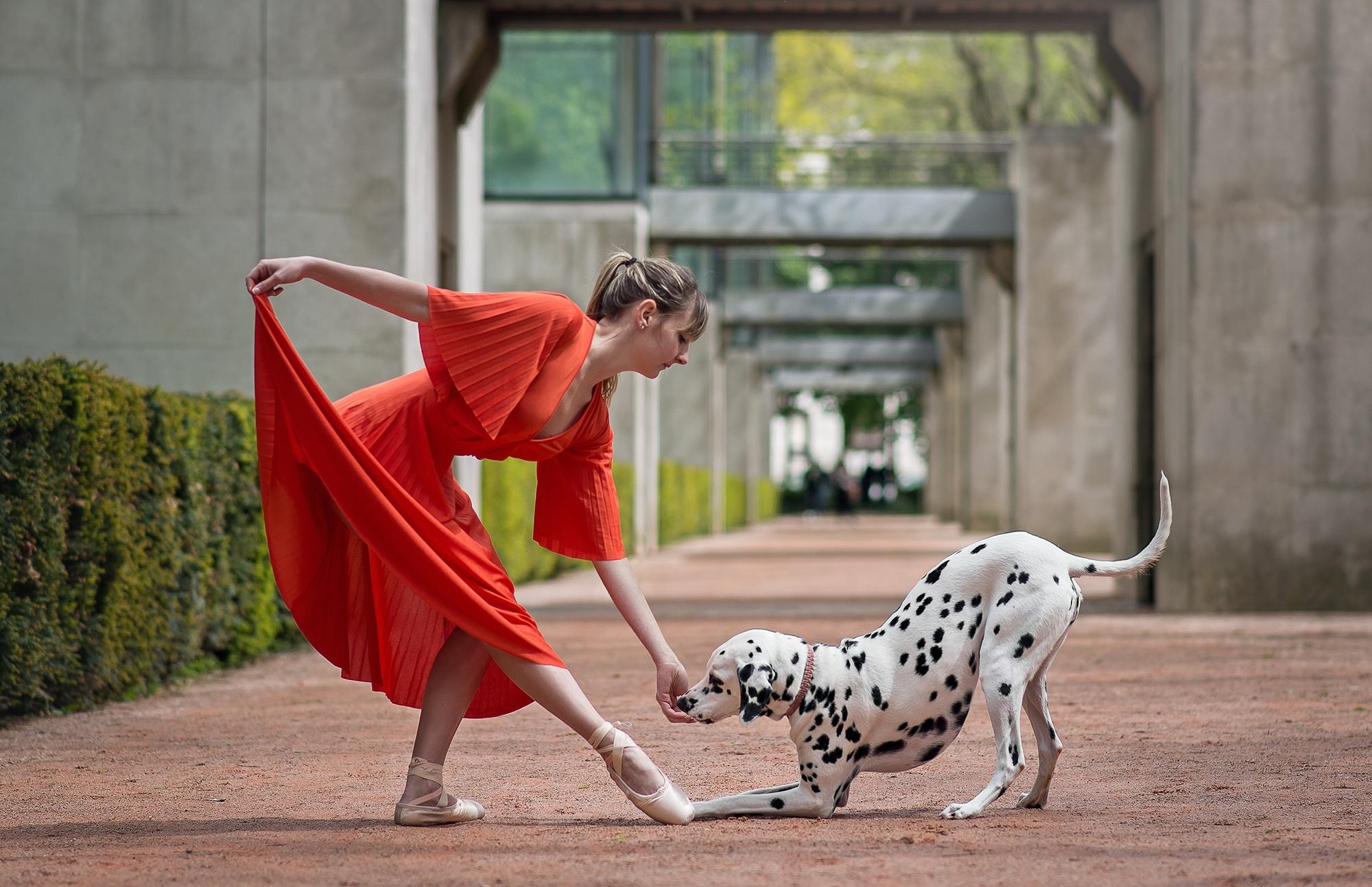 танцы с собаками картинки самых