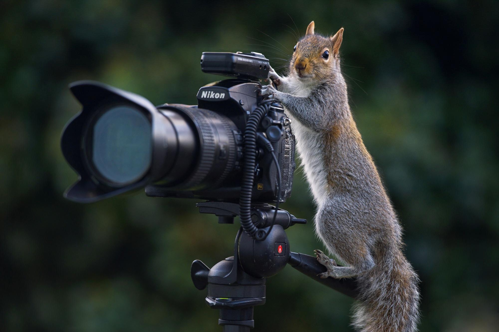 Деньгами для, прикольная картинка про фотографа