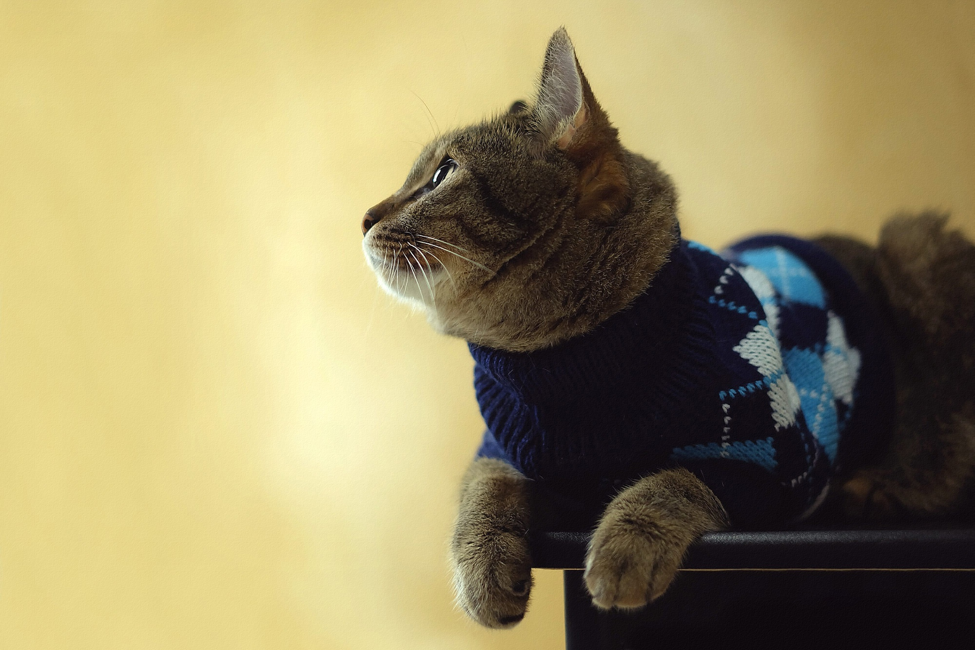 кот в свитере картинка человек