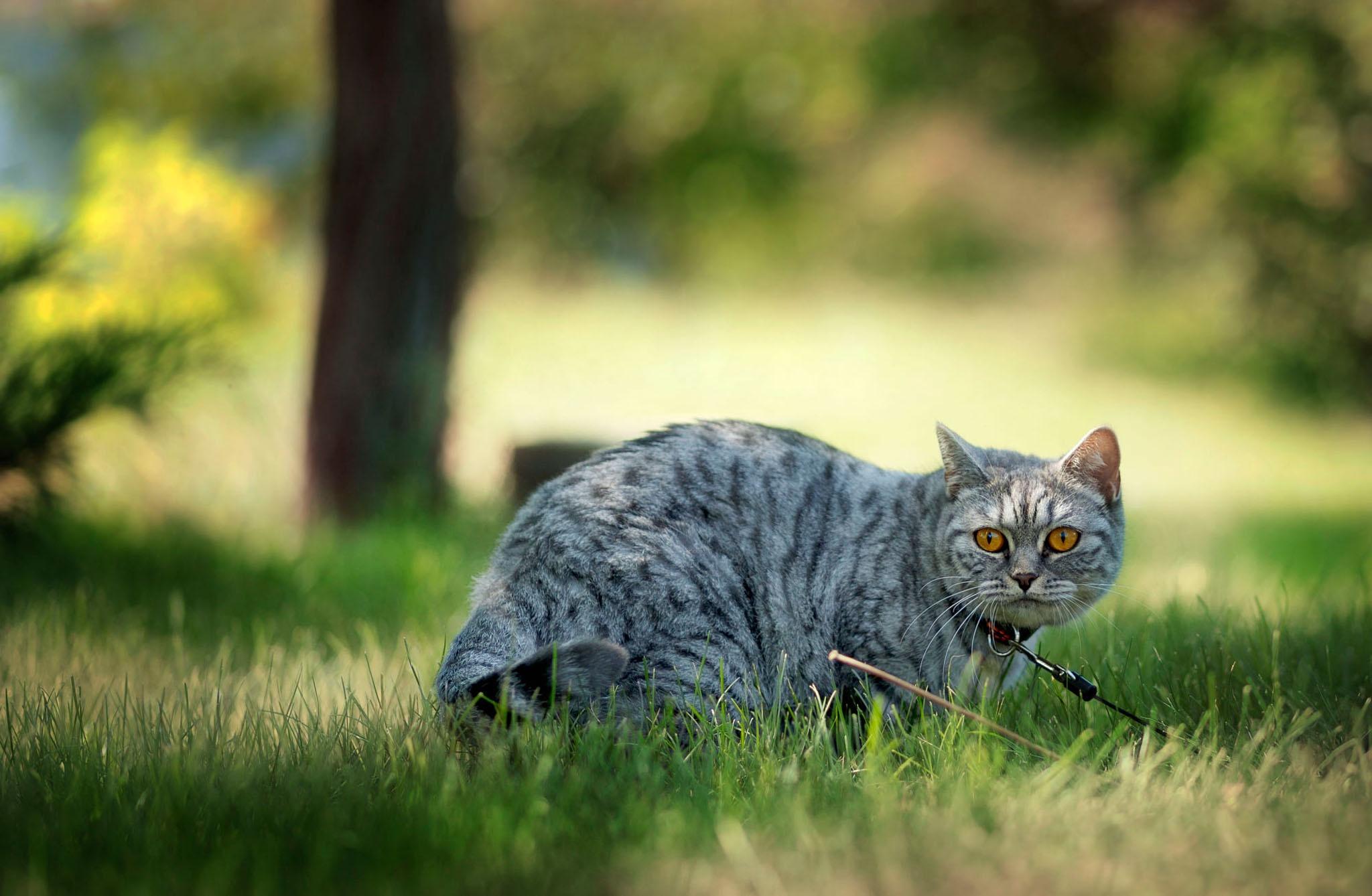 старость фото домашних котов на природе диалект языка очень
