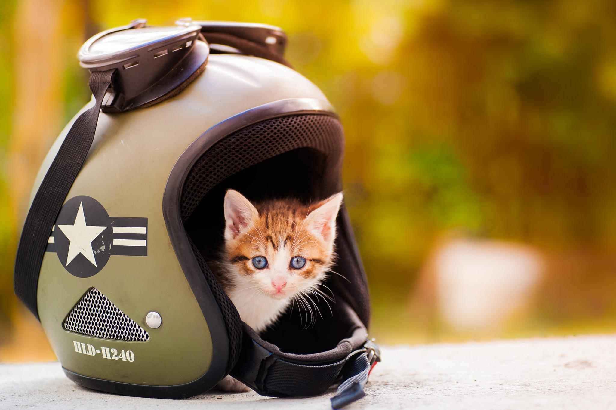 Котенок в каске картинка