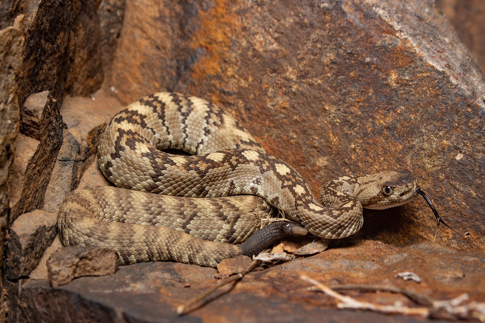 Картинка про змею и камень
