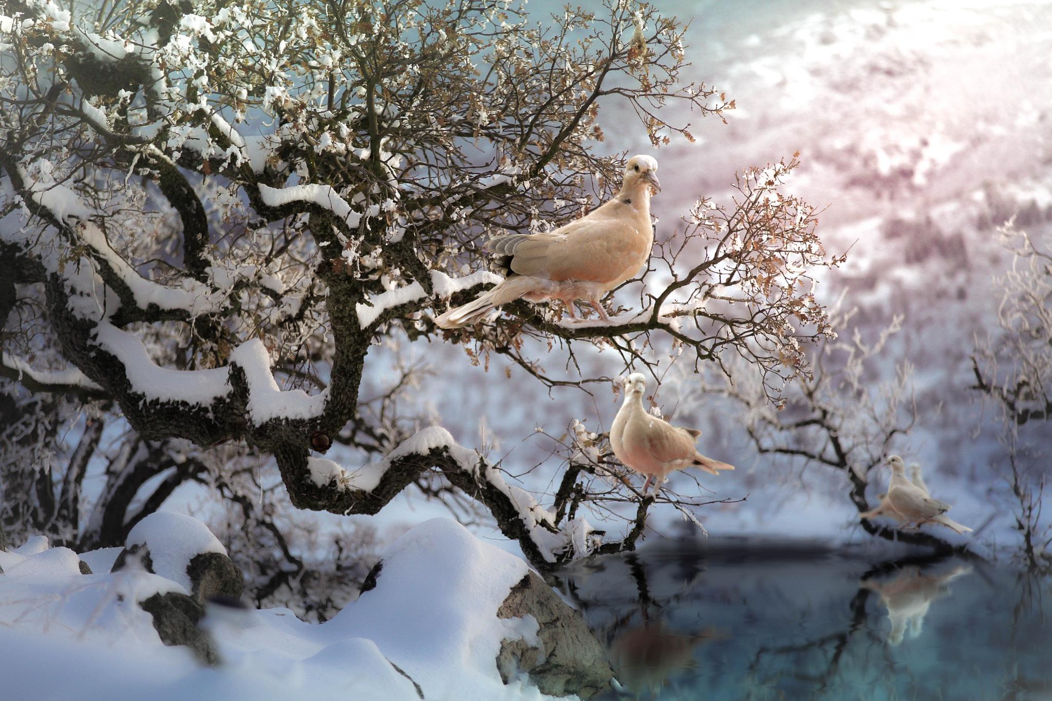 сделать птицы зимой на деревьях самом
