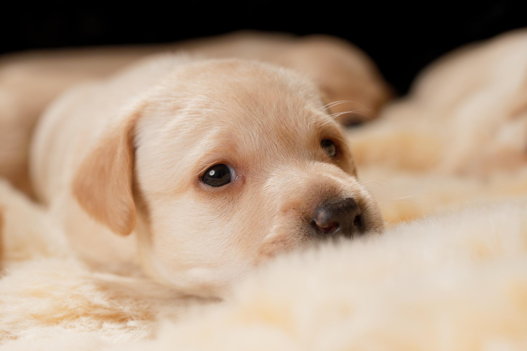 Картинки лежащего щенка