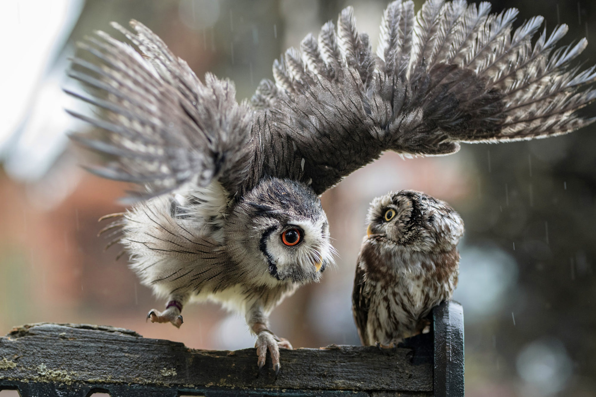 картинки две совы одна