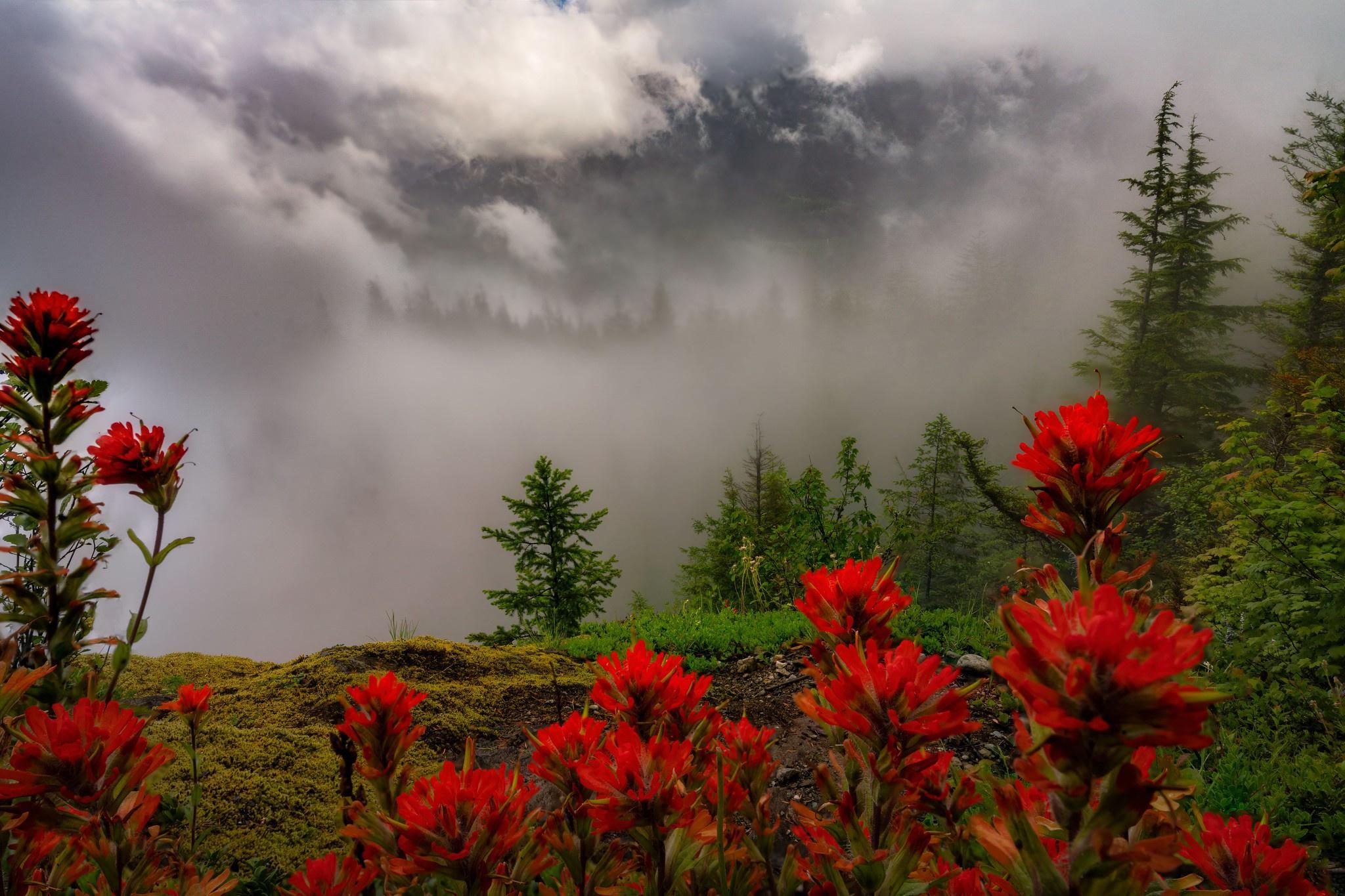 живете фото цветы в тумане сладкого перца