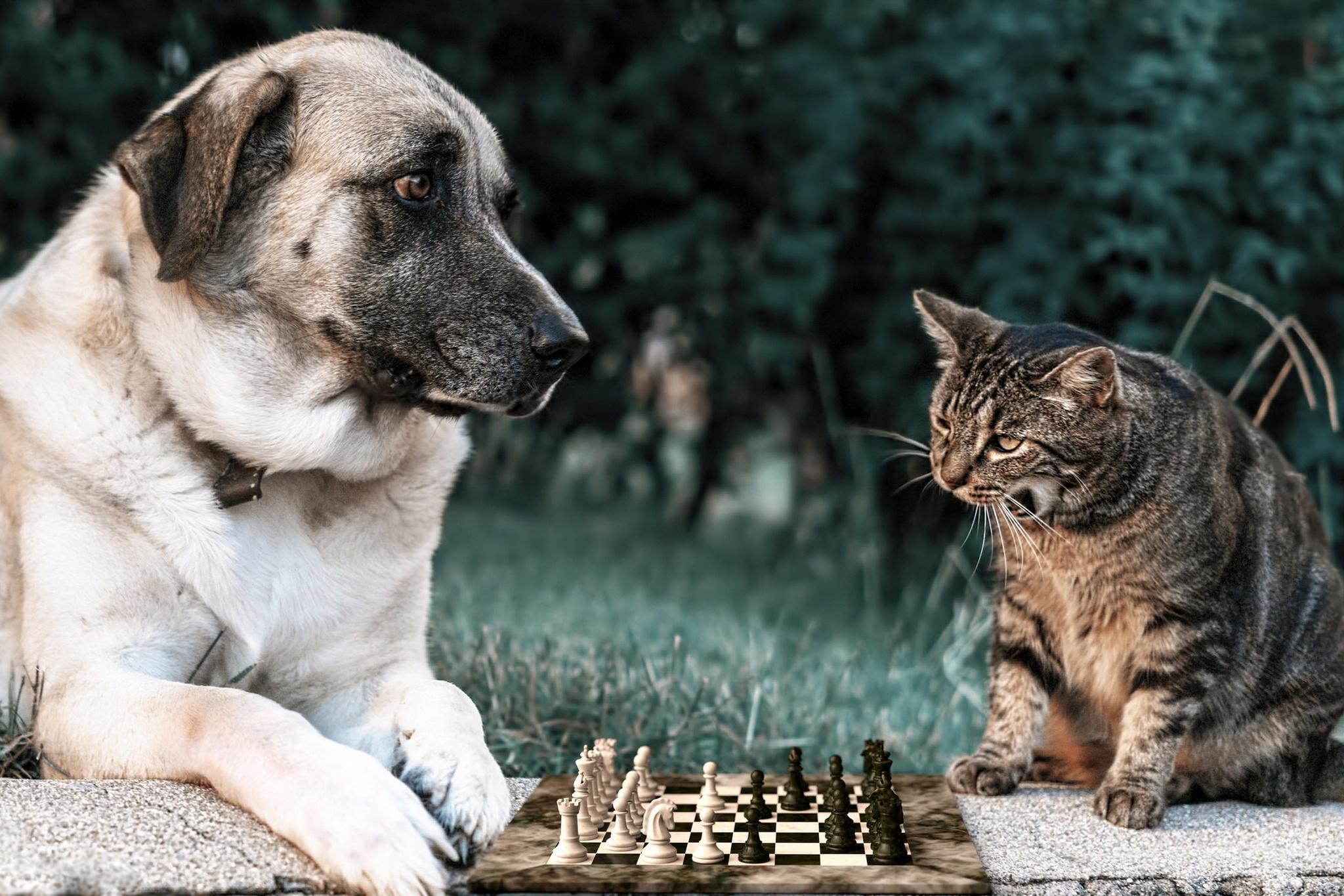 картинки кошек собак природа