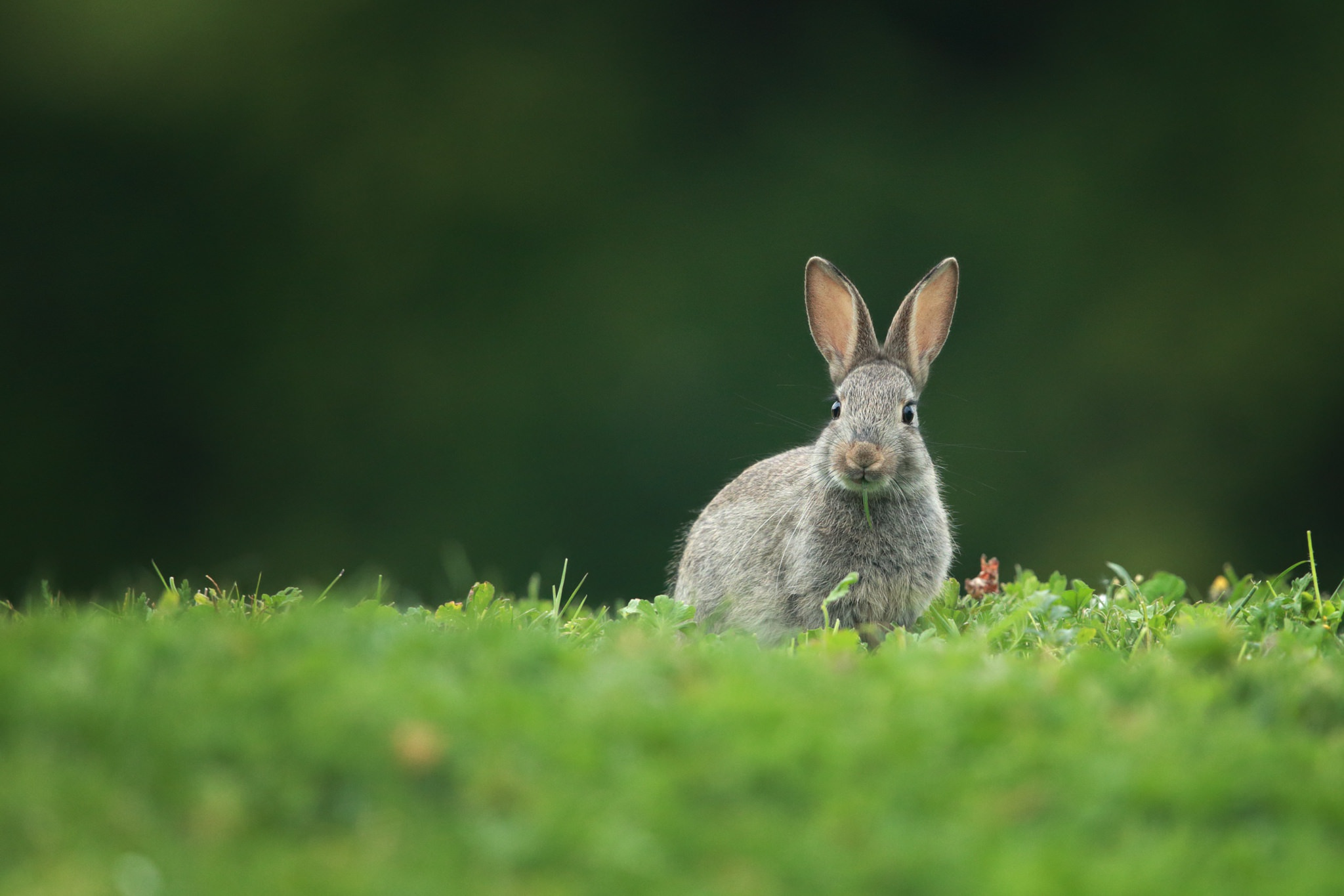 картинки заяц на лугу балка
