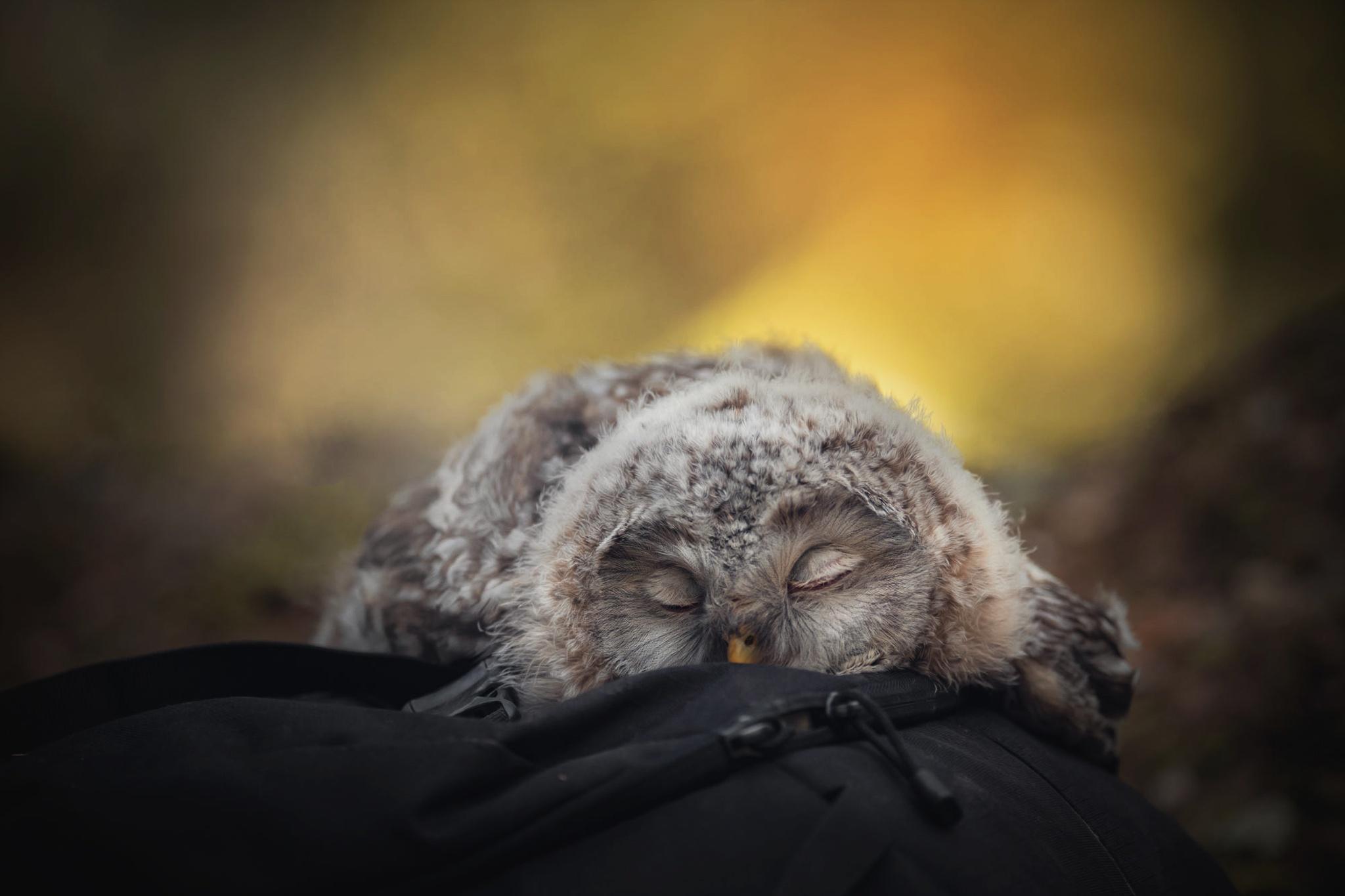 тебе сова спящая картинка прикольная жалейте