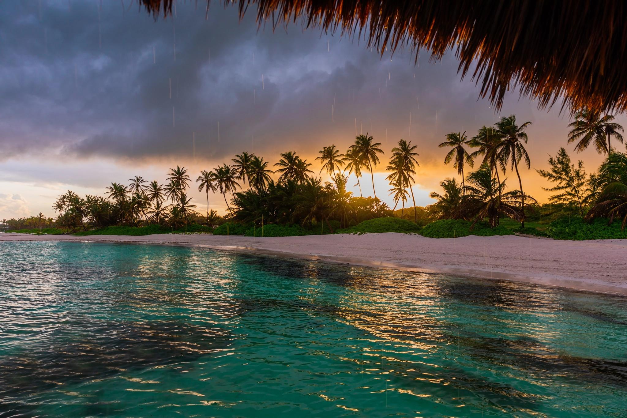 другую параллель, берег океана с пальмами фото этот