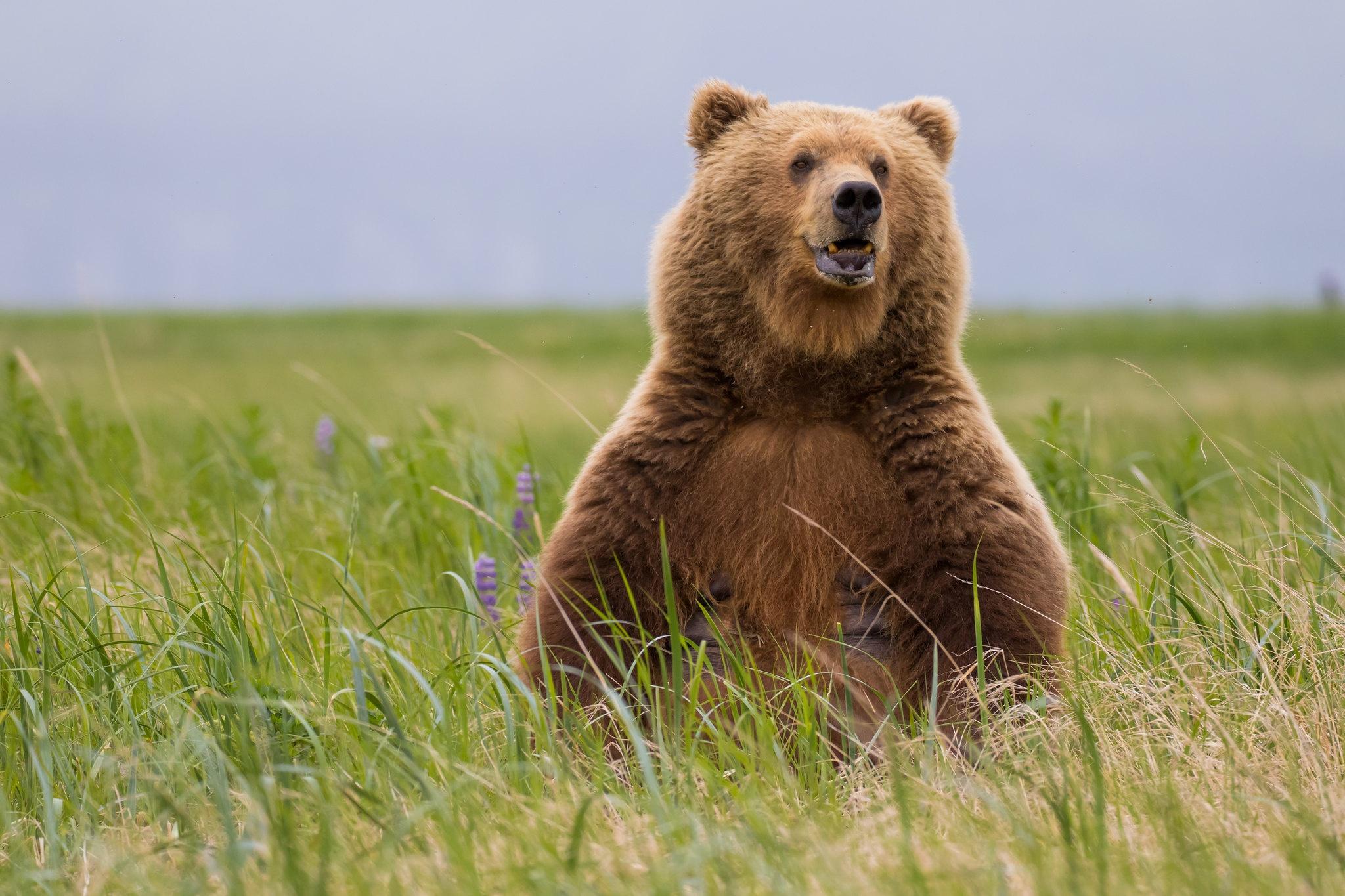 Смешные картинки медведей смотреть