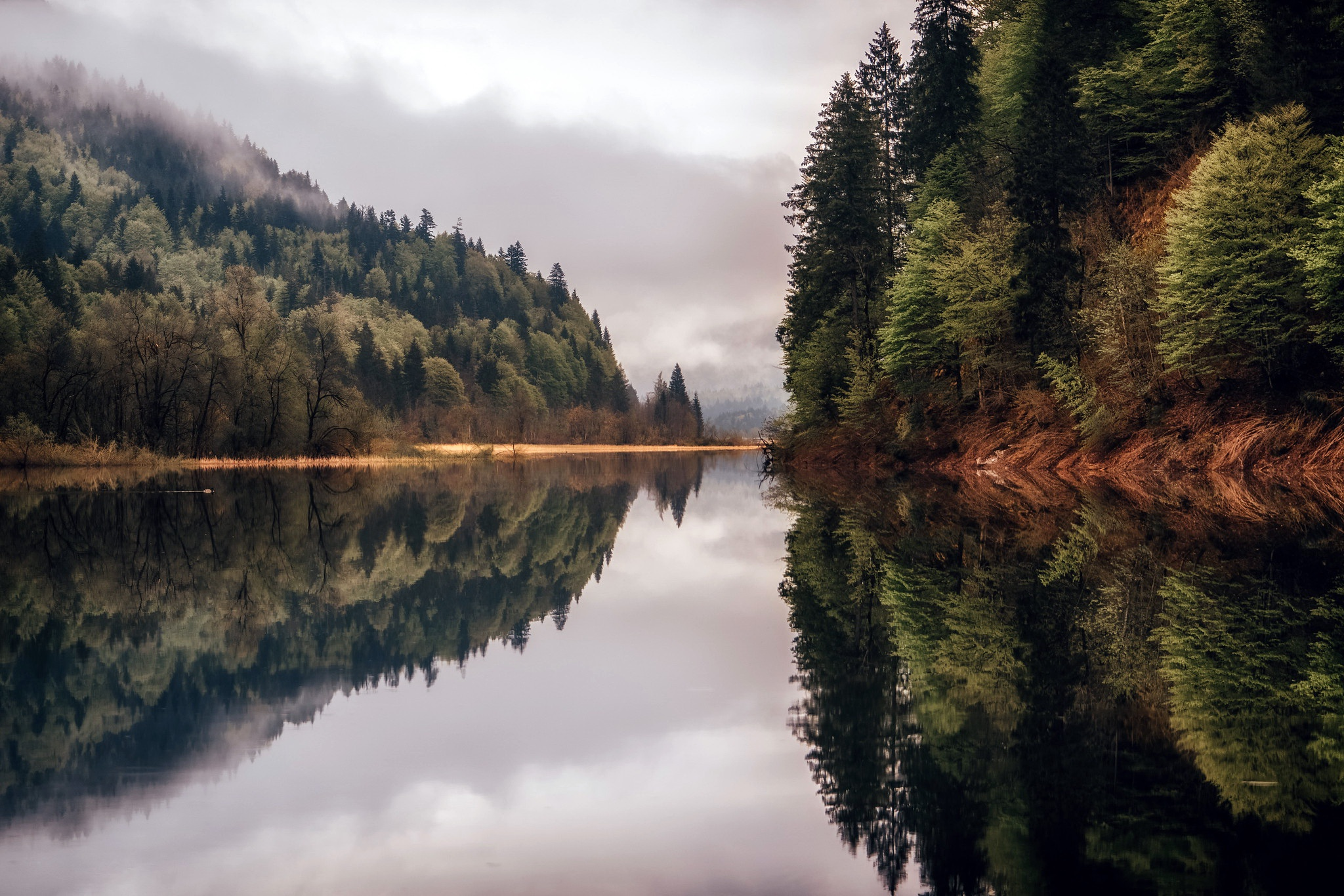 Картинка с рекой и лесом