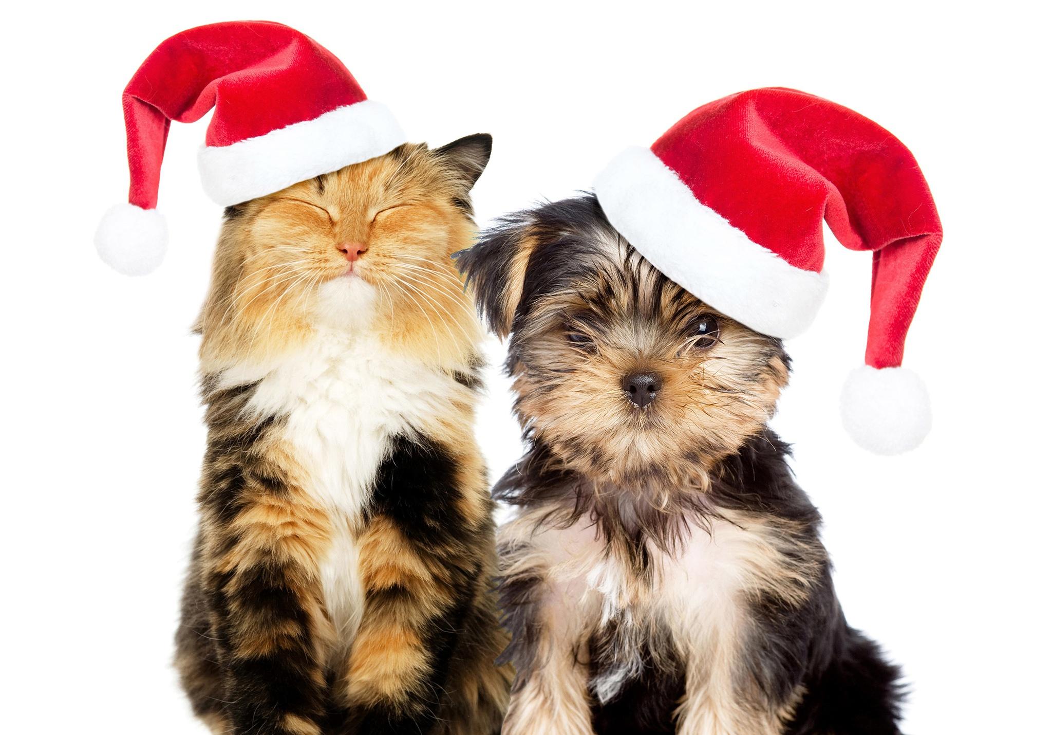 Новогодние поздравления с животными картинки
