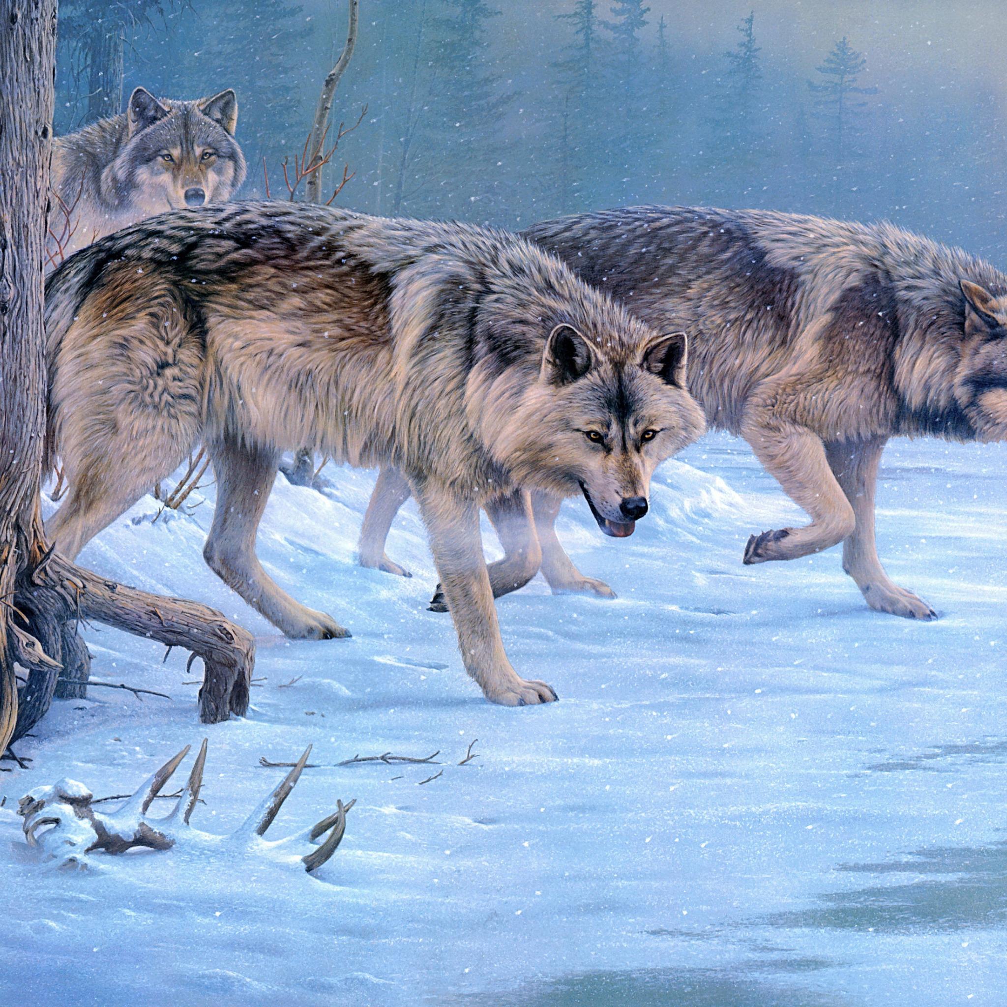 картинка как охотится волк зимой имеющихся возможностей