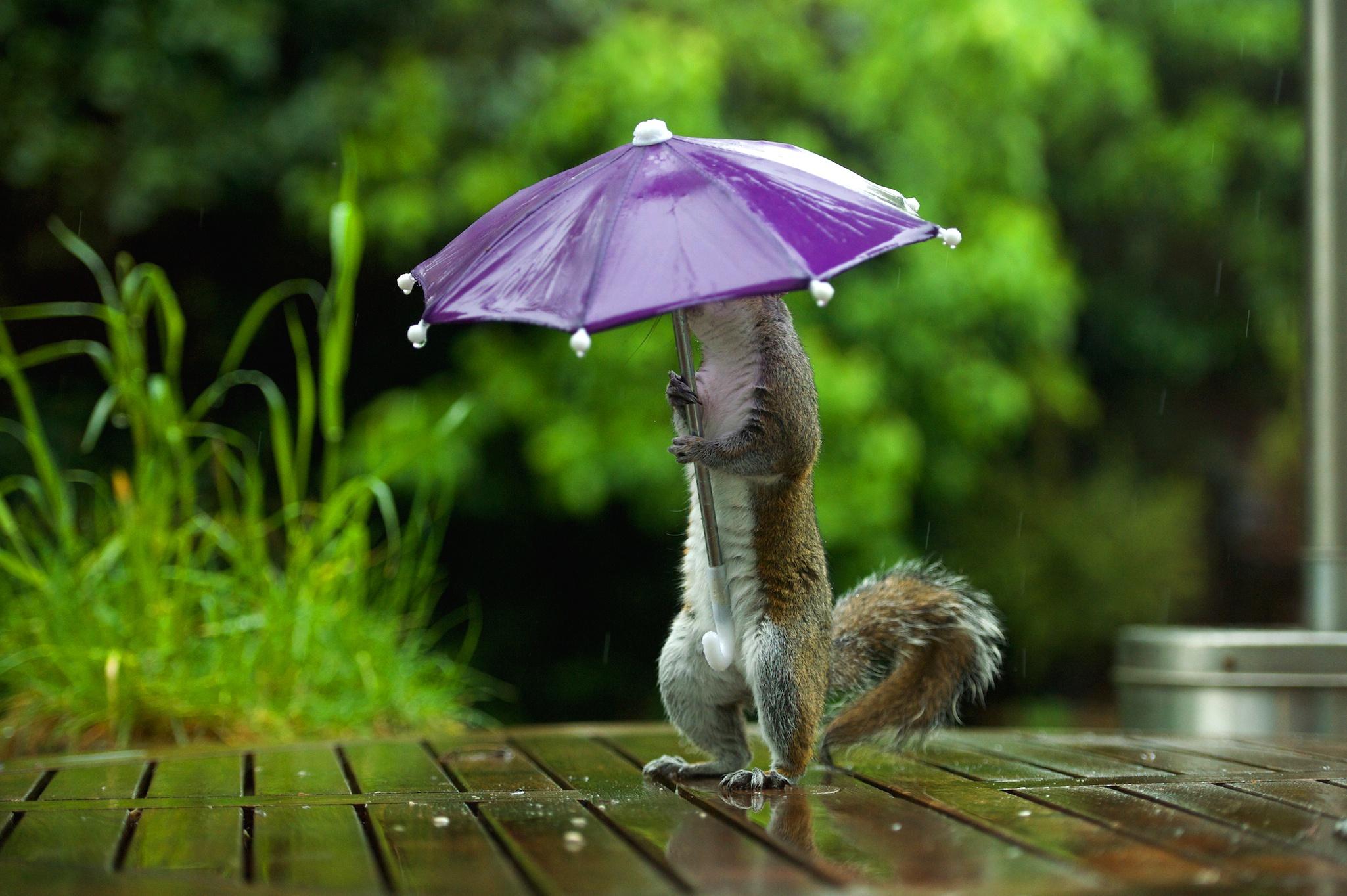 Прикольные картинки о дожде