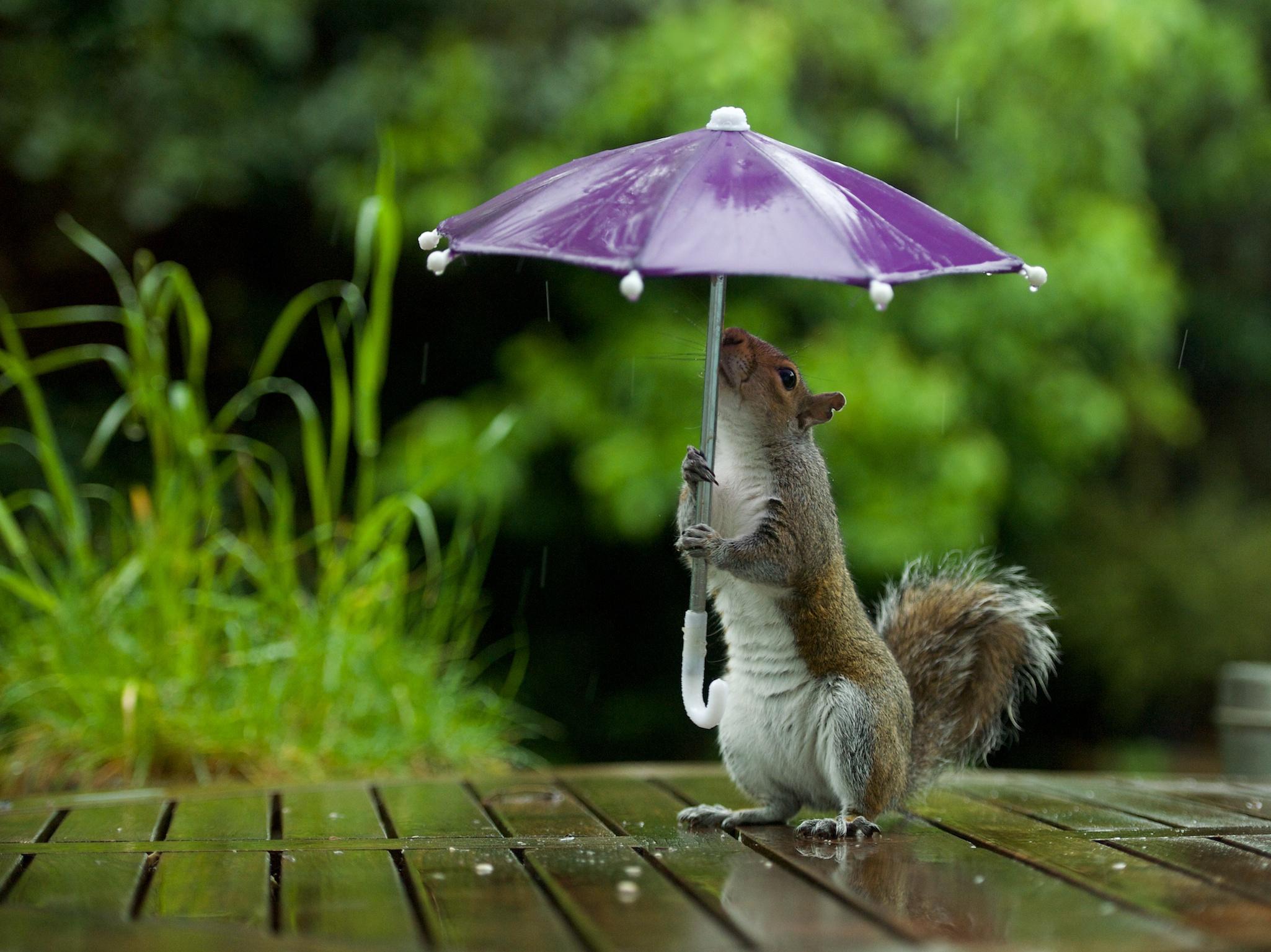 Картинка про дождь прикольные, новый год поделки
