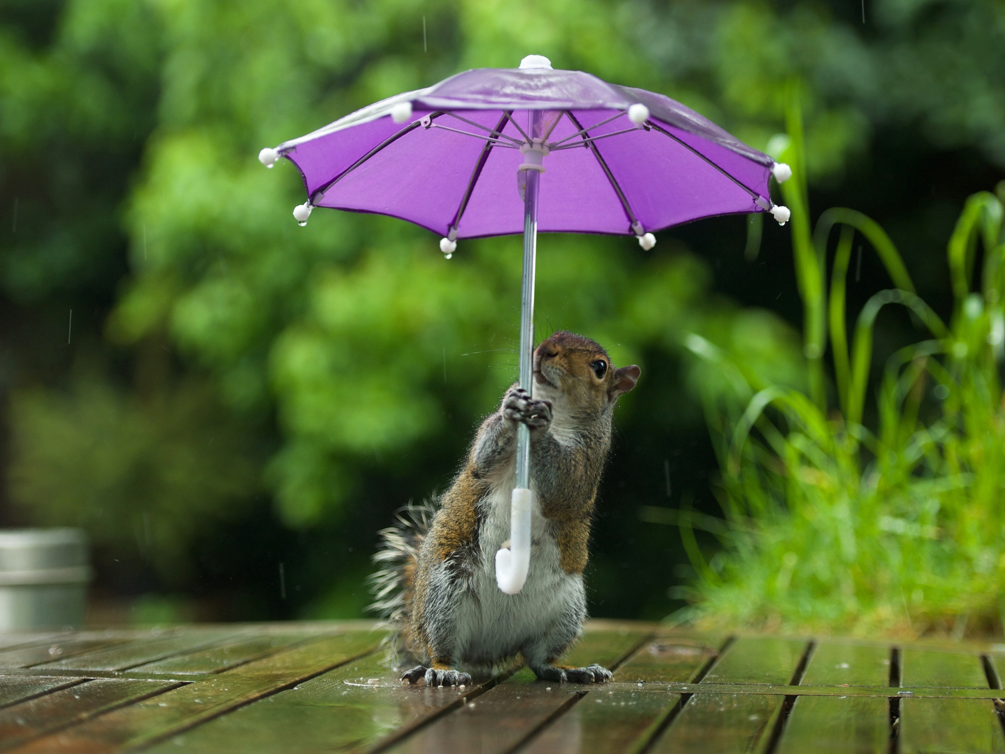 самых важных картинки прикольные под зонтом без них