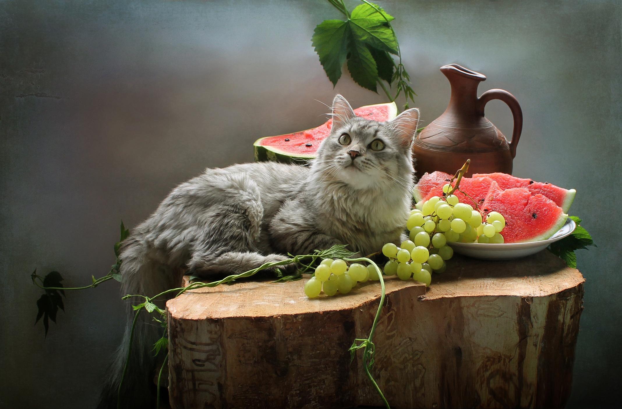 картинки котики с фруктами дачнику ландшафтном
